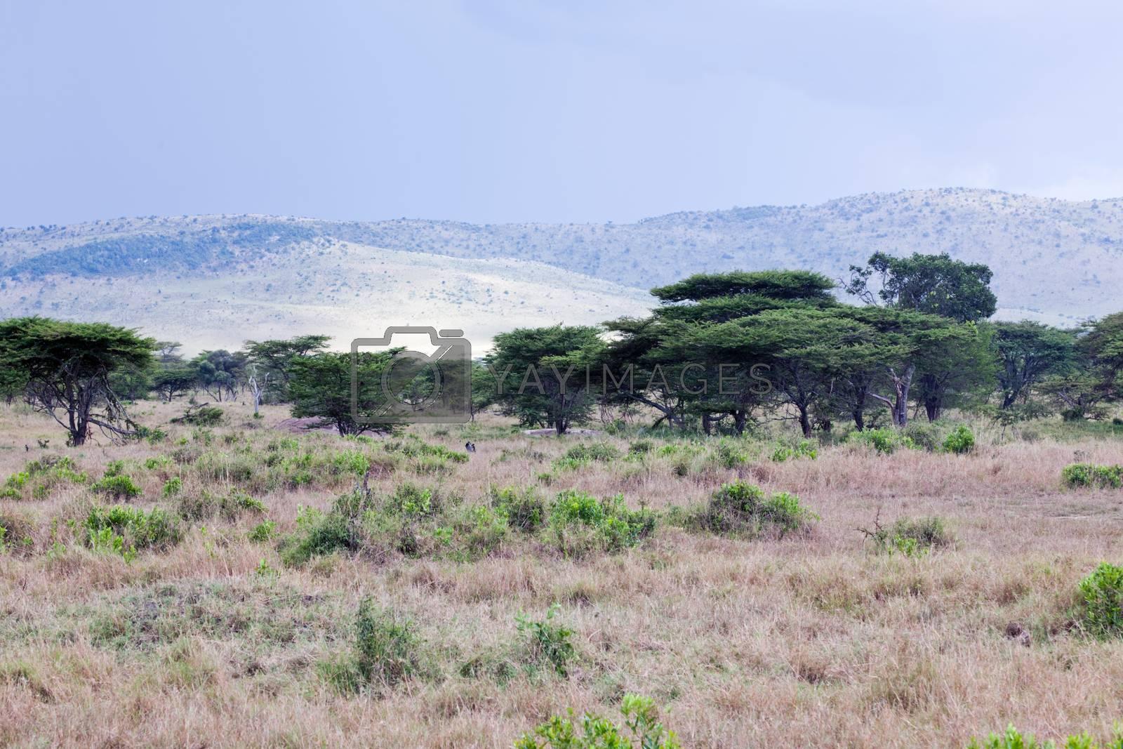 Royalty free image of Savanna landscape in Africa, Serengeti, Tanzania by photocreo