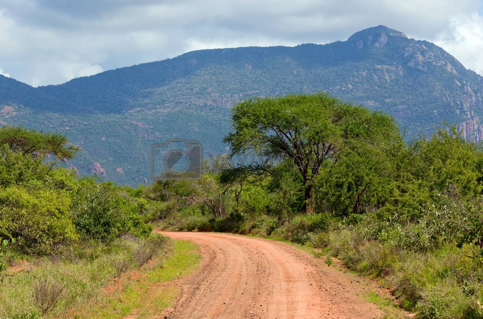 Royalty free image of Red ground road, bush with savanna. Tsavo West, Kenya, Africa by photocreo