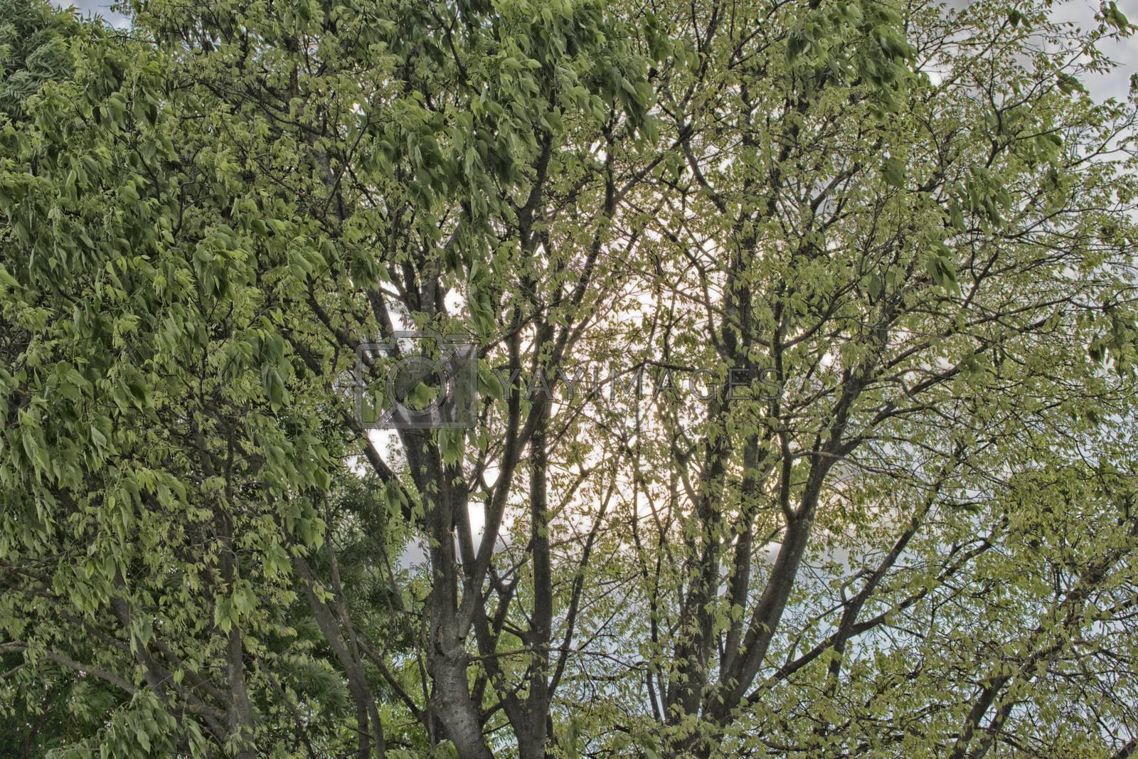 Green leaves on light yellow sunlight