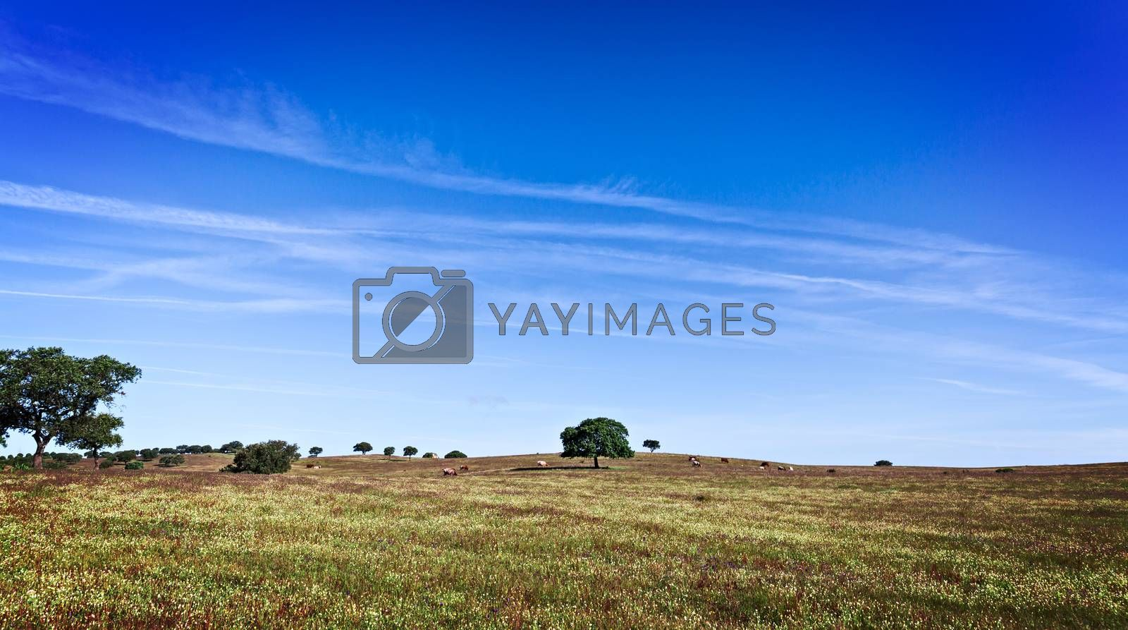 Green Grass Field Landscape by Discovod