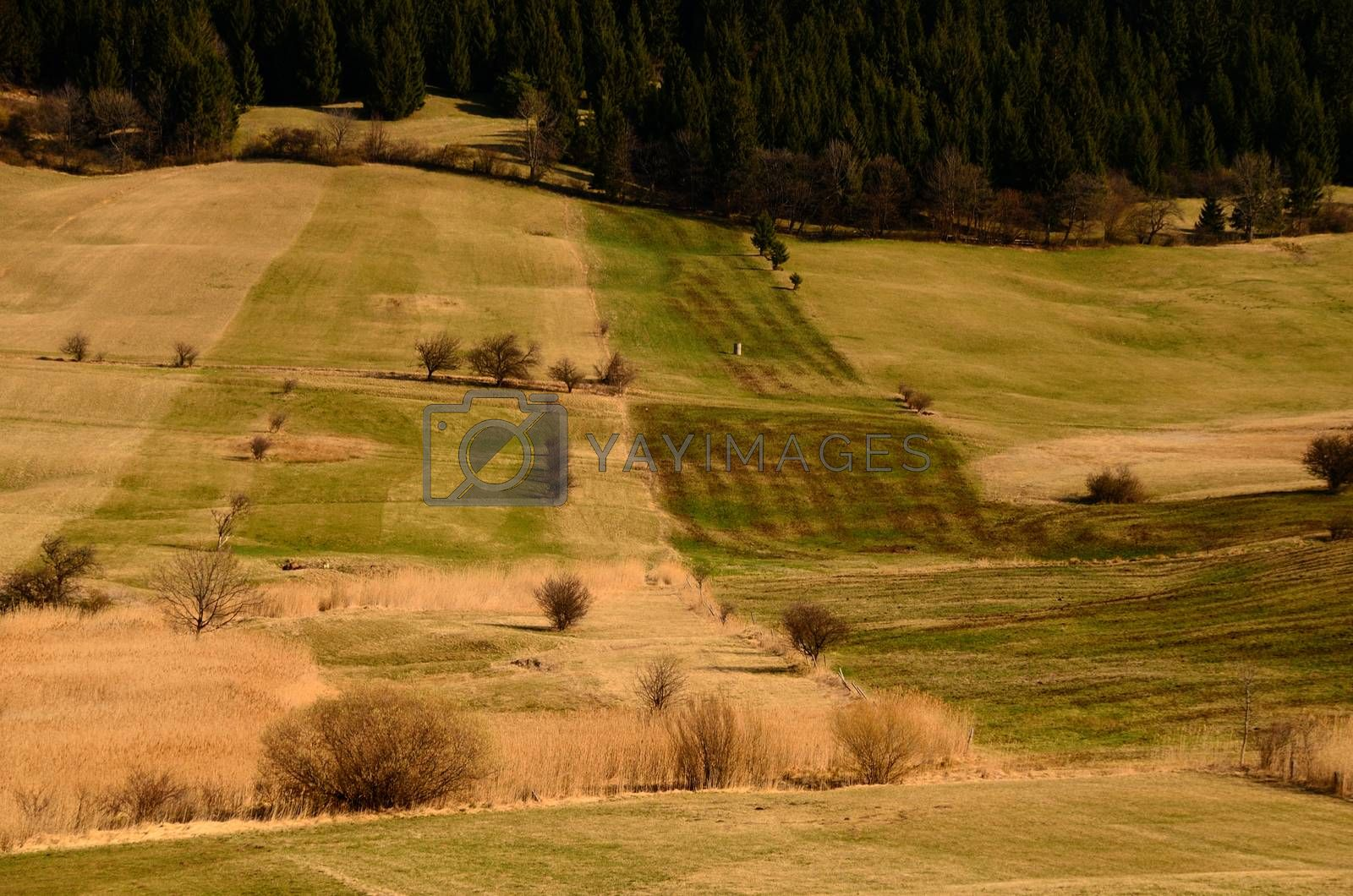 different colored grass landscape in springtime