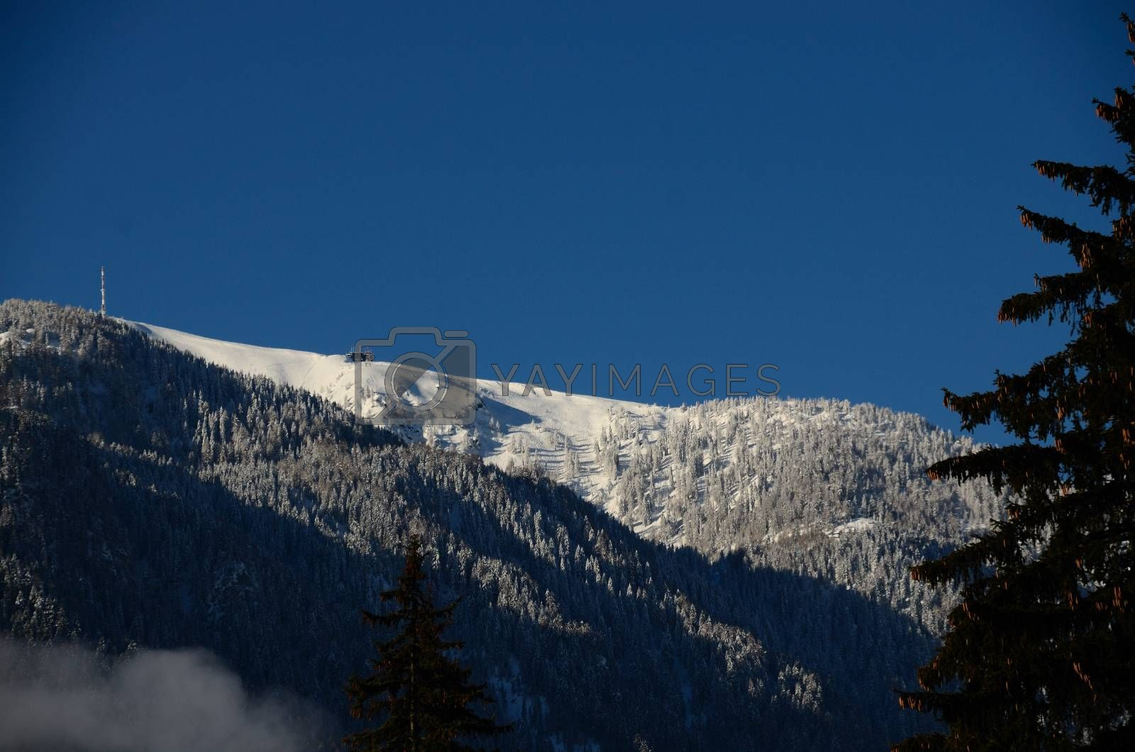 beautiful winter landscape on mountain with snow and fir trees