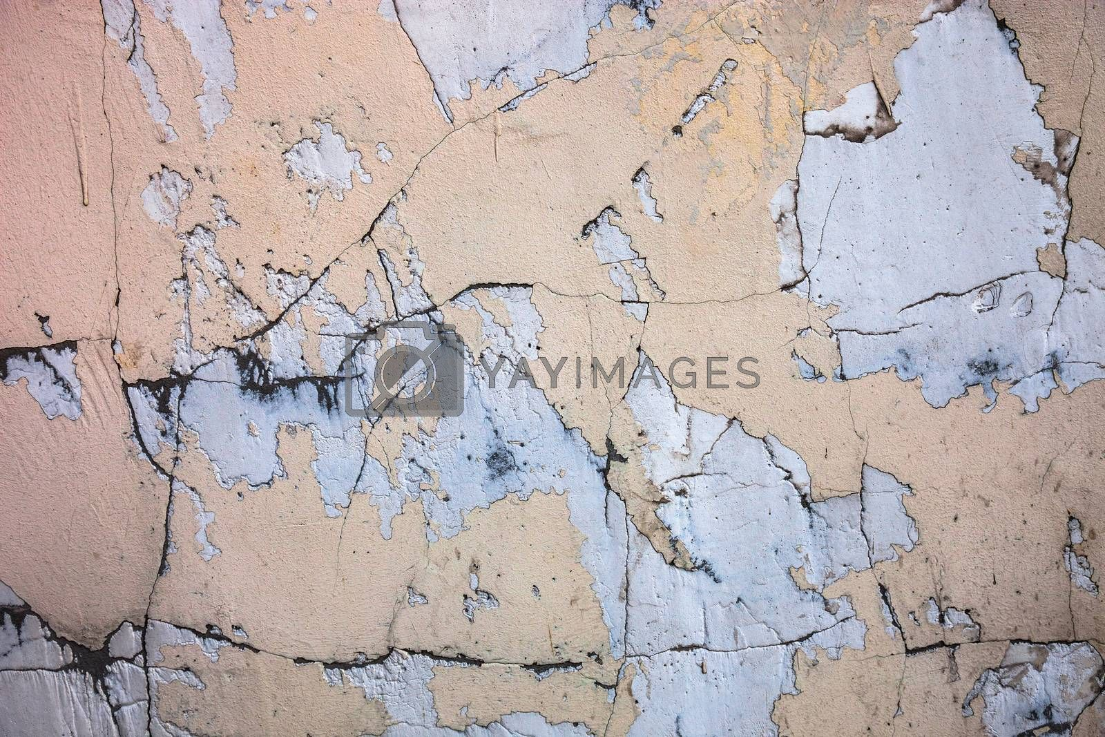 Cracked concrete surface with the remains of sandy-tan paint by rootstocks