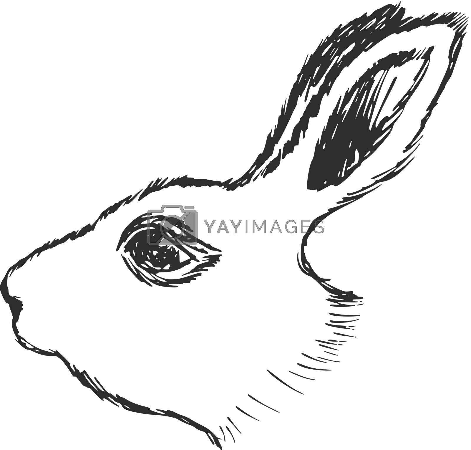 hand drawn, sketch, cartoon illustration of rabbit
