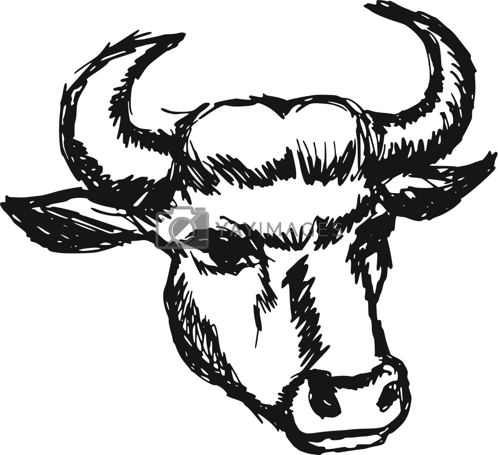 hand drawn, sketch, cartoon illustration of cow