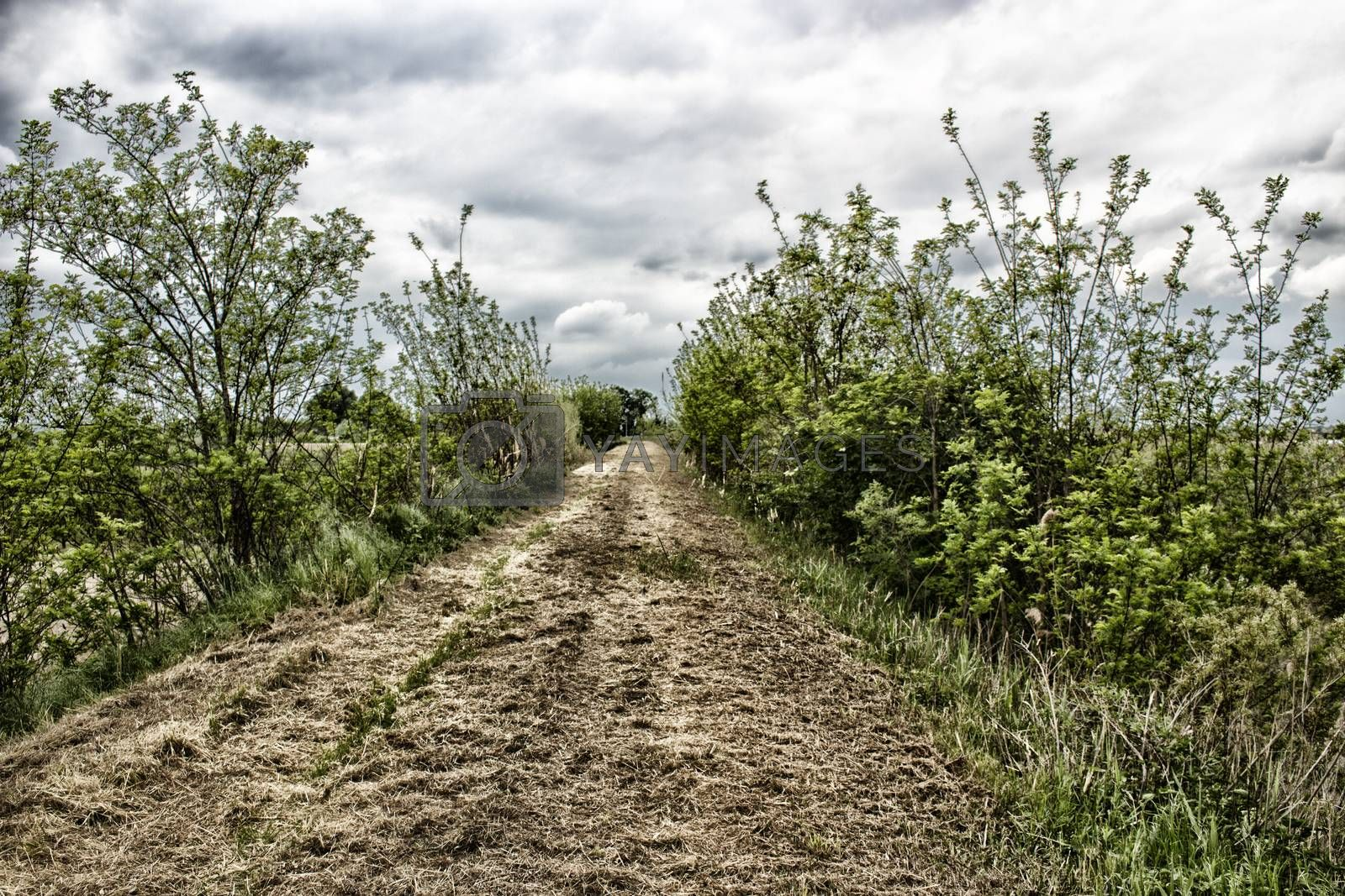Walking on dry grass on the embankment of the senio river in Italian countryside