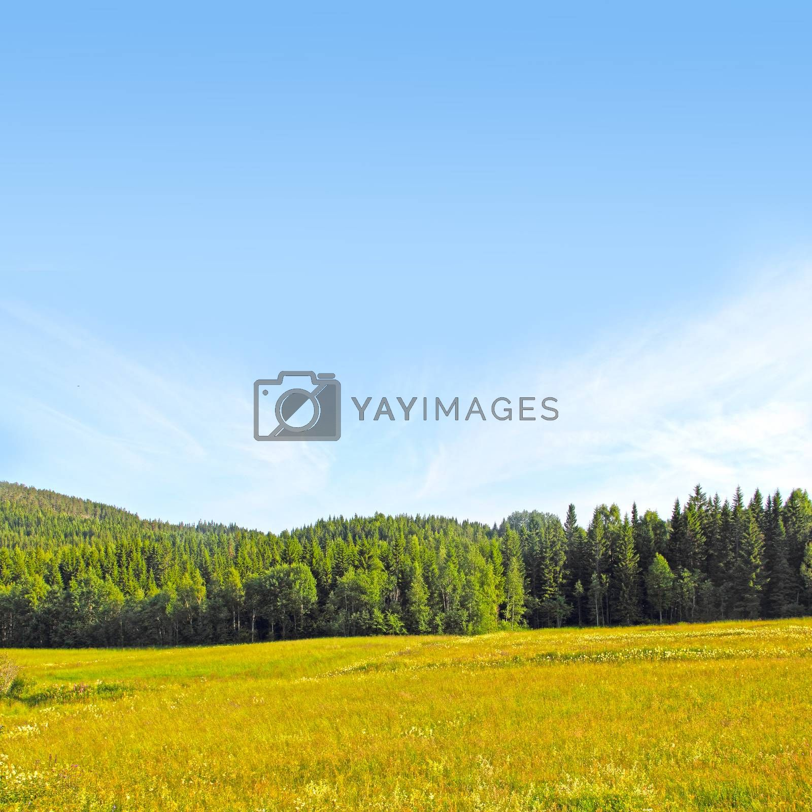 Scandinavian landscape with field, mountains and forest at sunny summer day