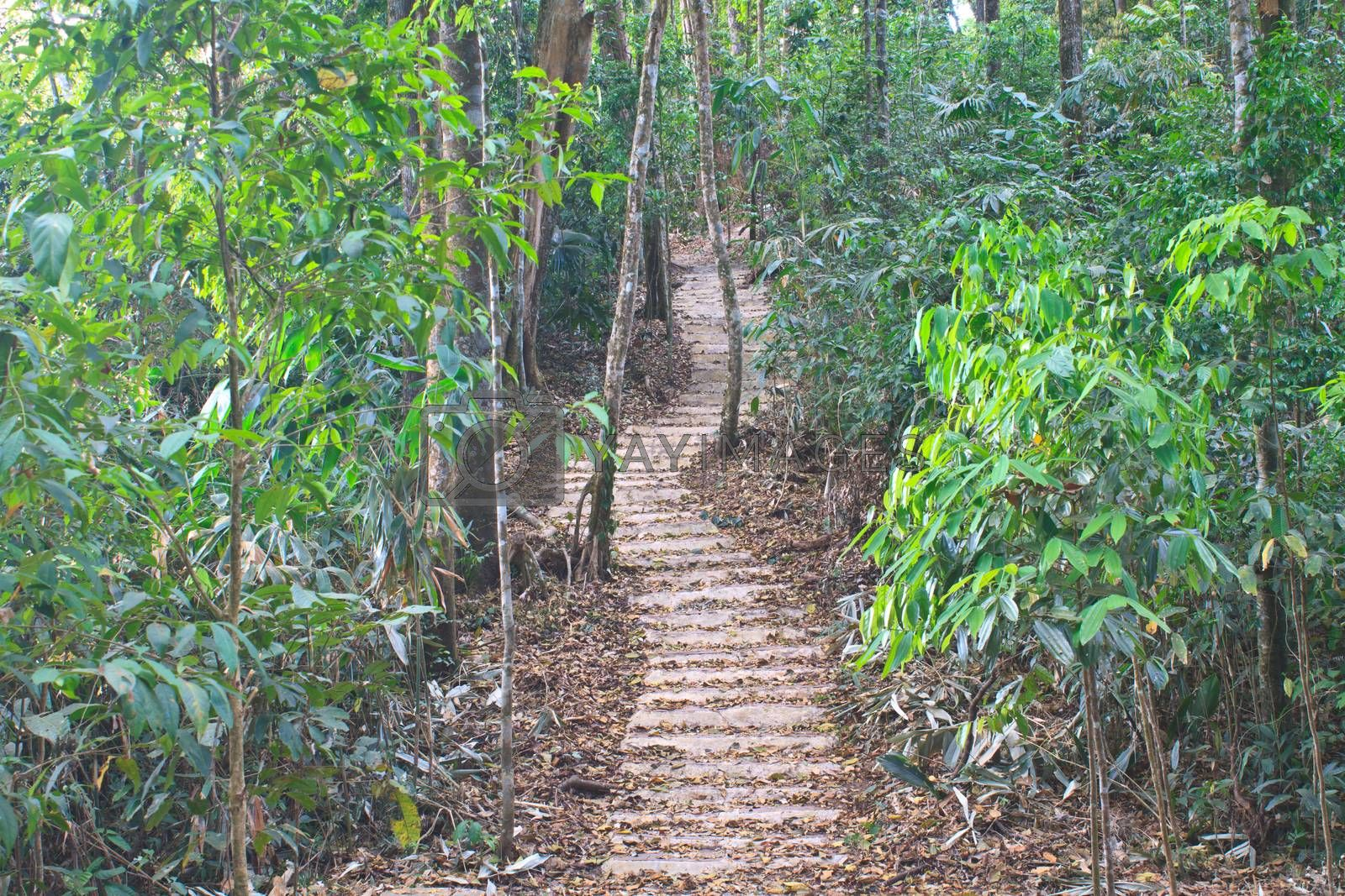 Stairway to jungle, in national park, Thailand