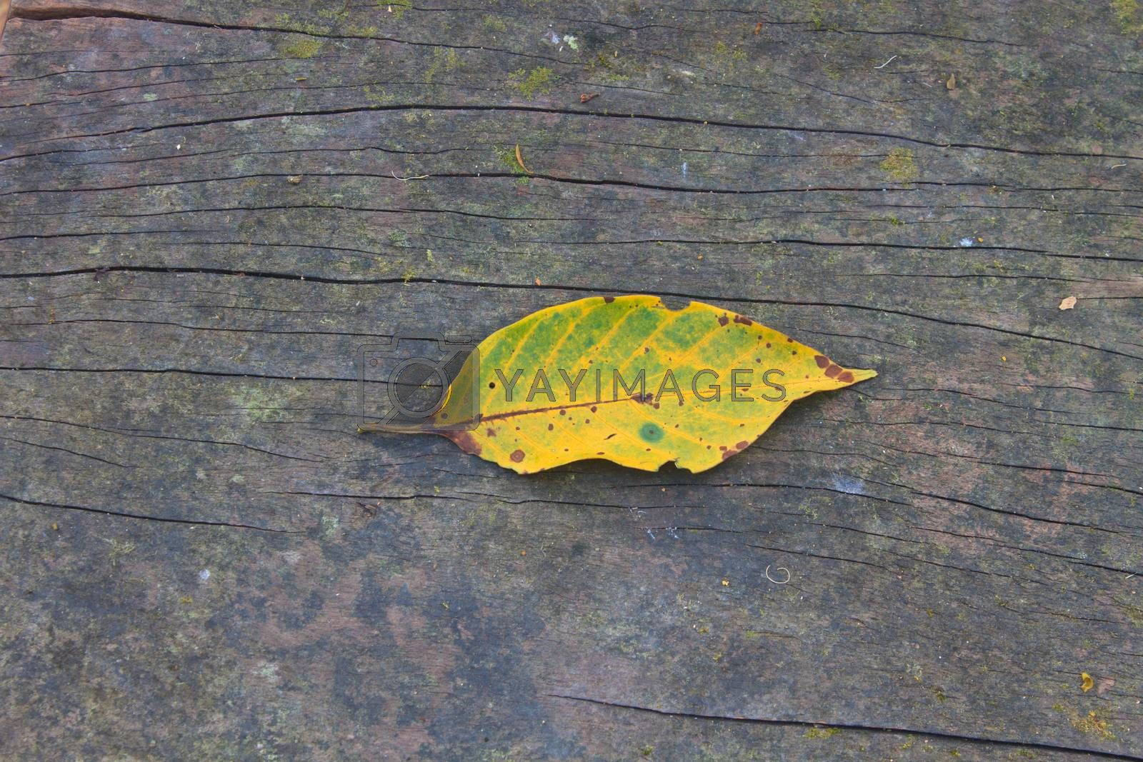 Yellow autumn leaf on a background of wooden bench