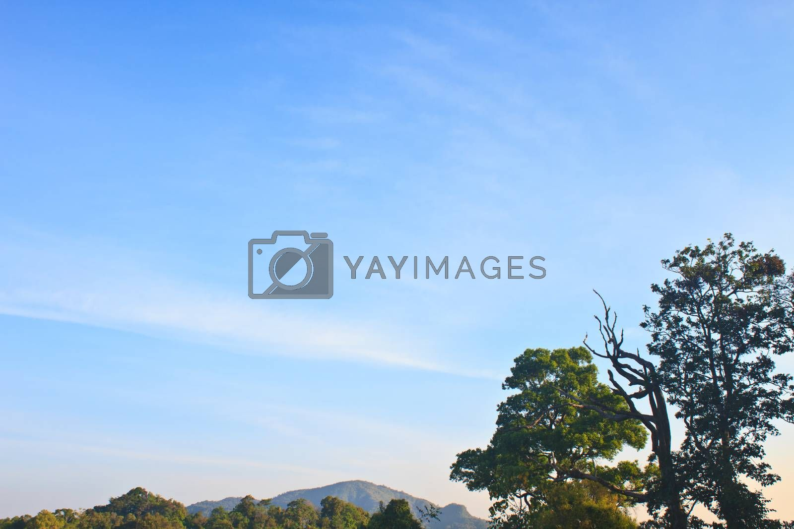 green forest and blue sky background
