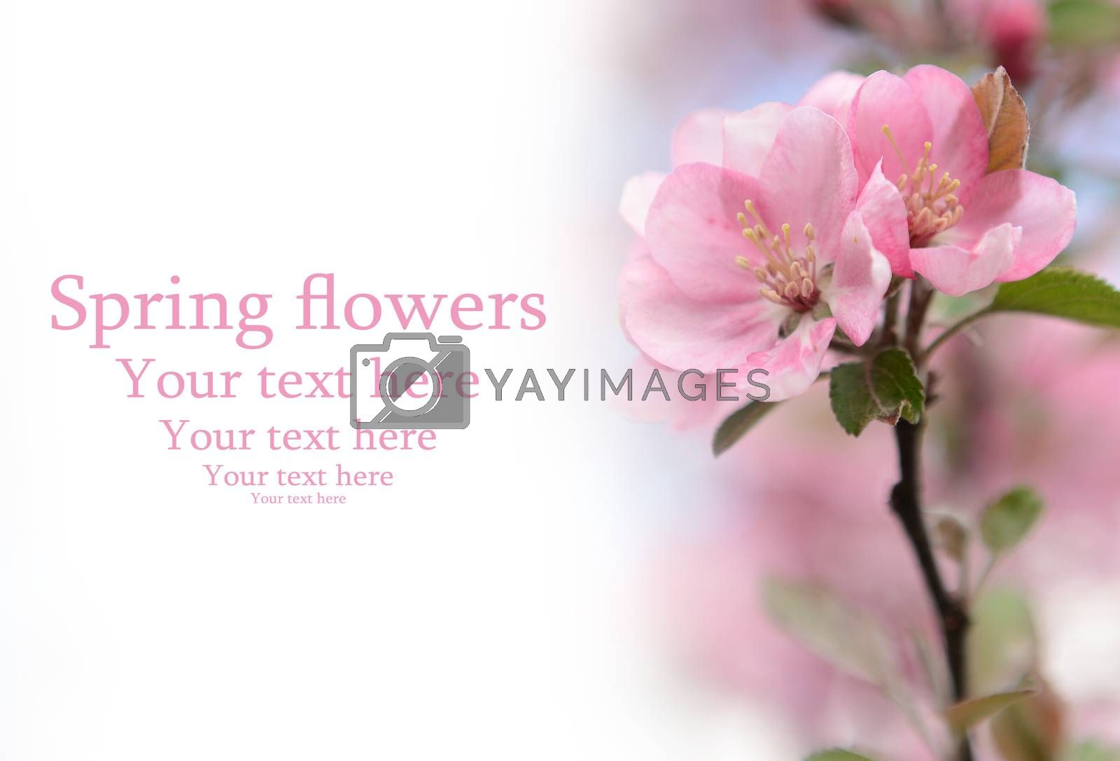 Spring flowers background with space forYour text