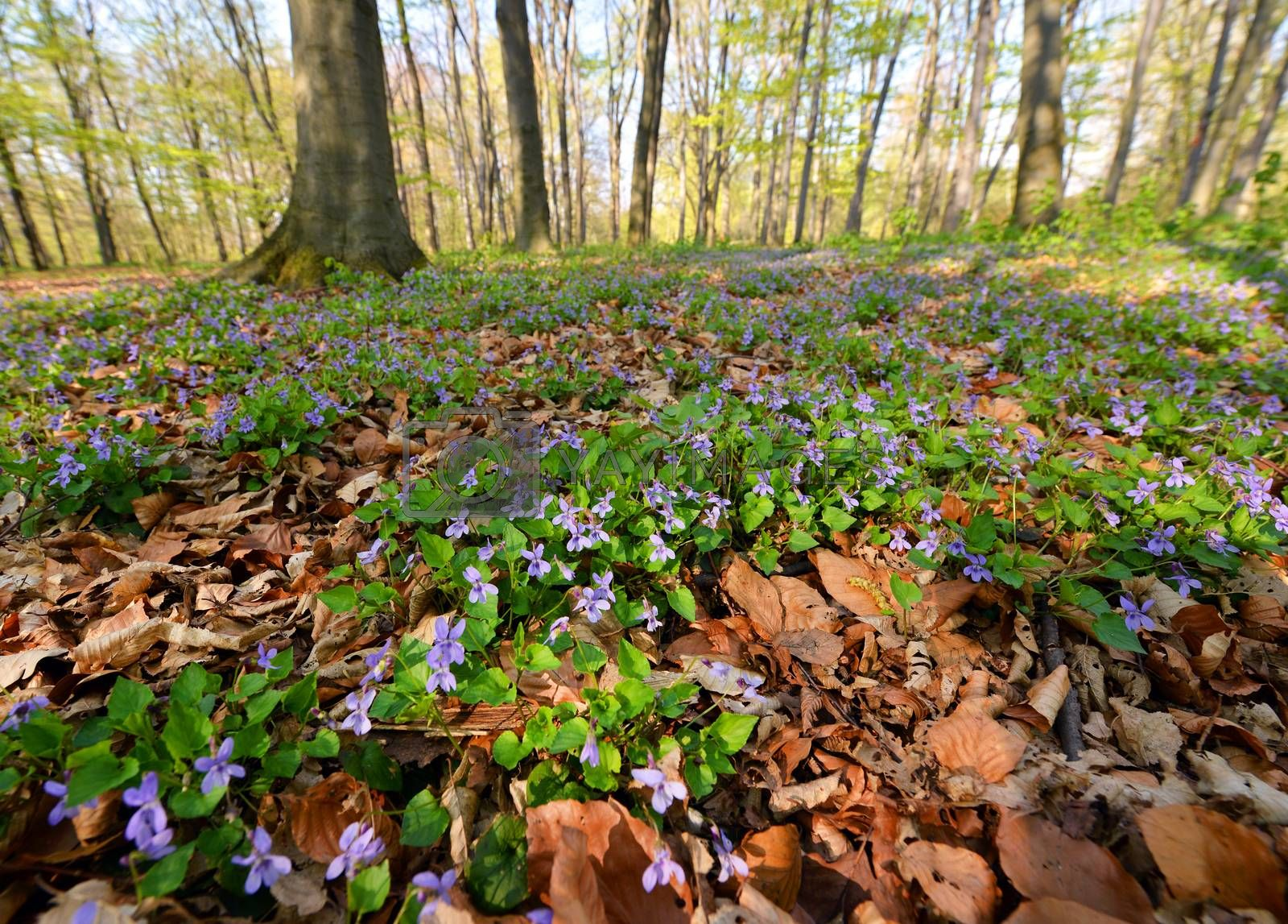 Beautiful flowers in spring forest
