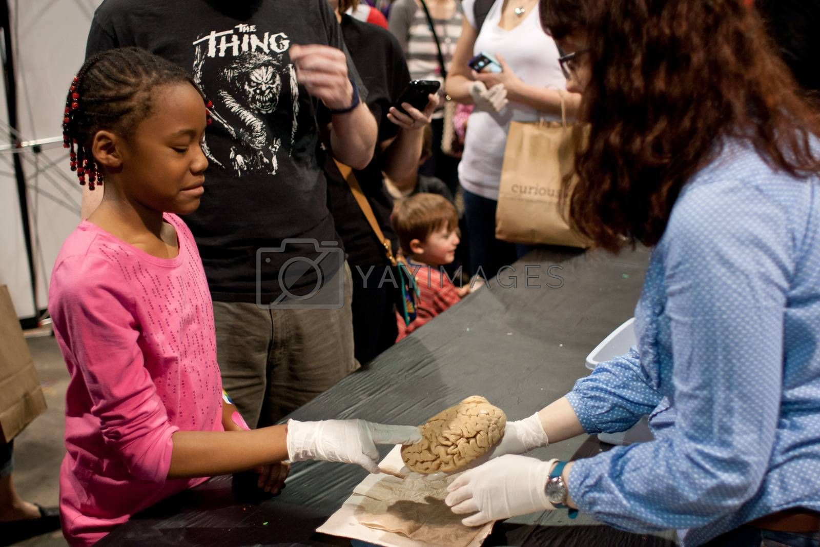 Royalty free image of Girl Grimaces Touching Human Brain At Science Expo by BluIz60