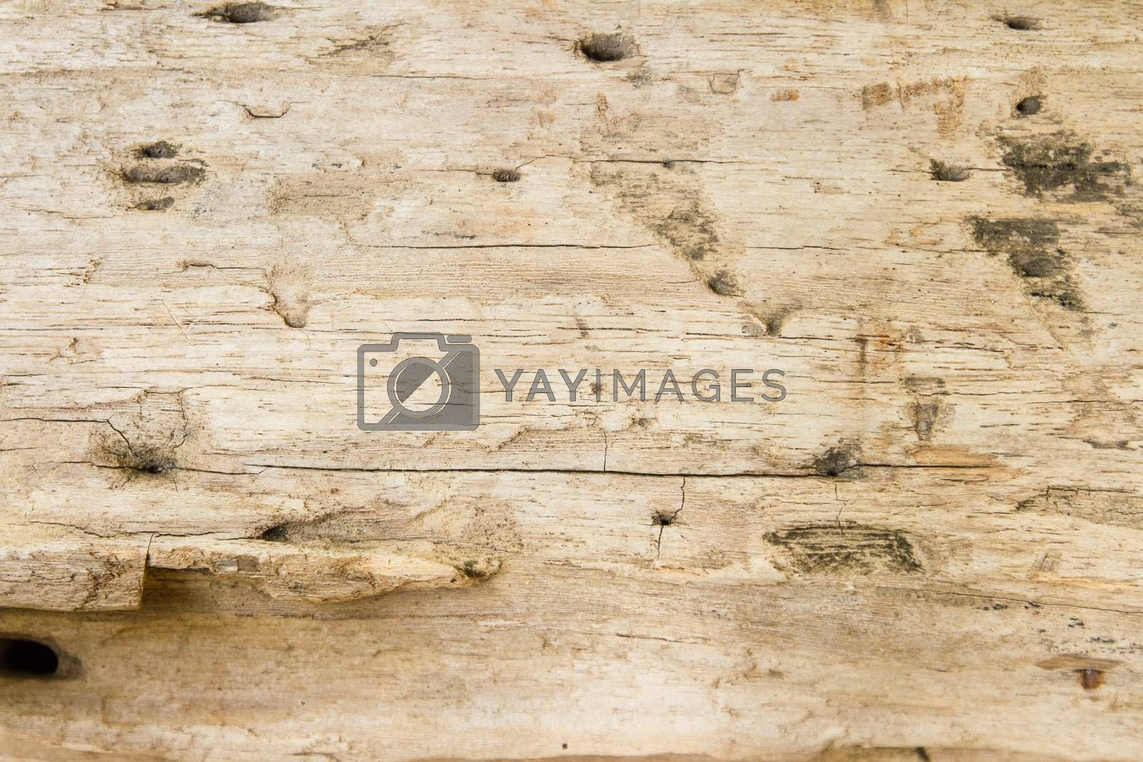 Royalty free image of Wood texture background by kasinv