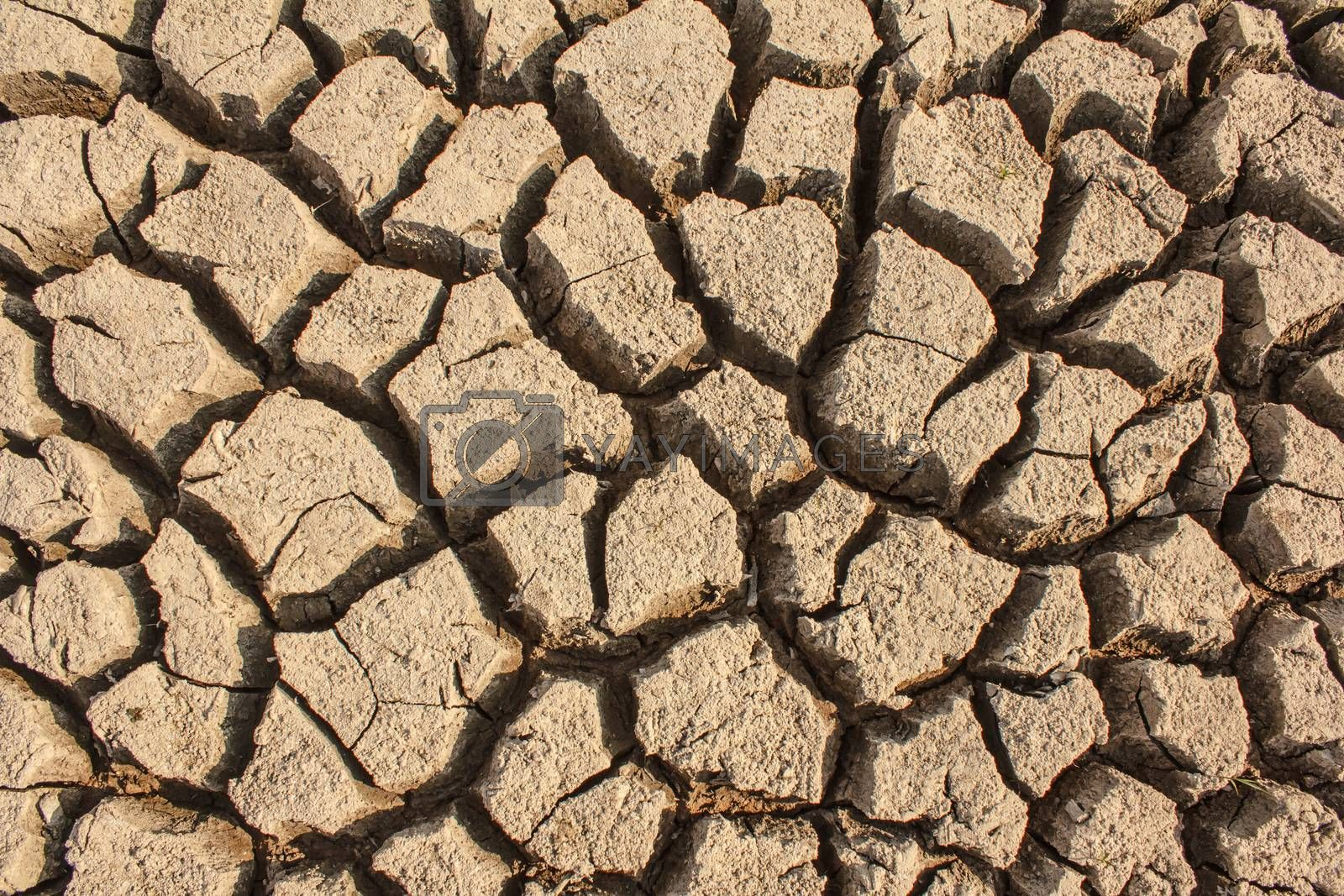 Royalty free image of Dry by letoakin