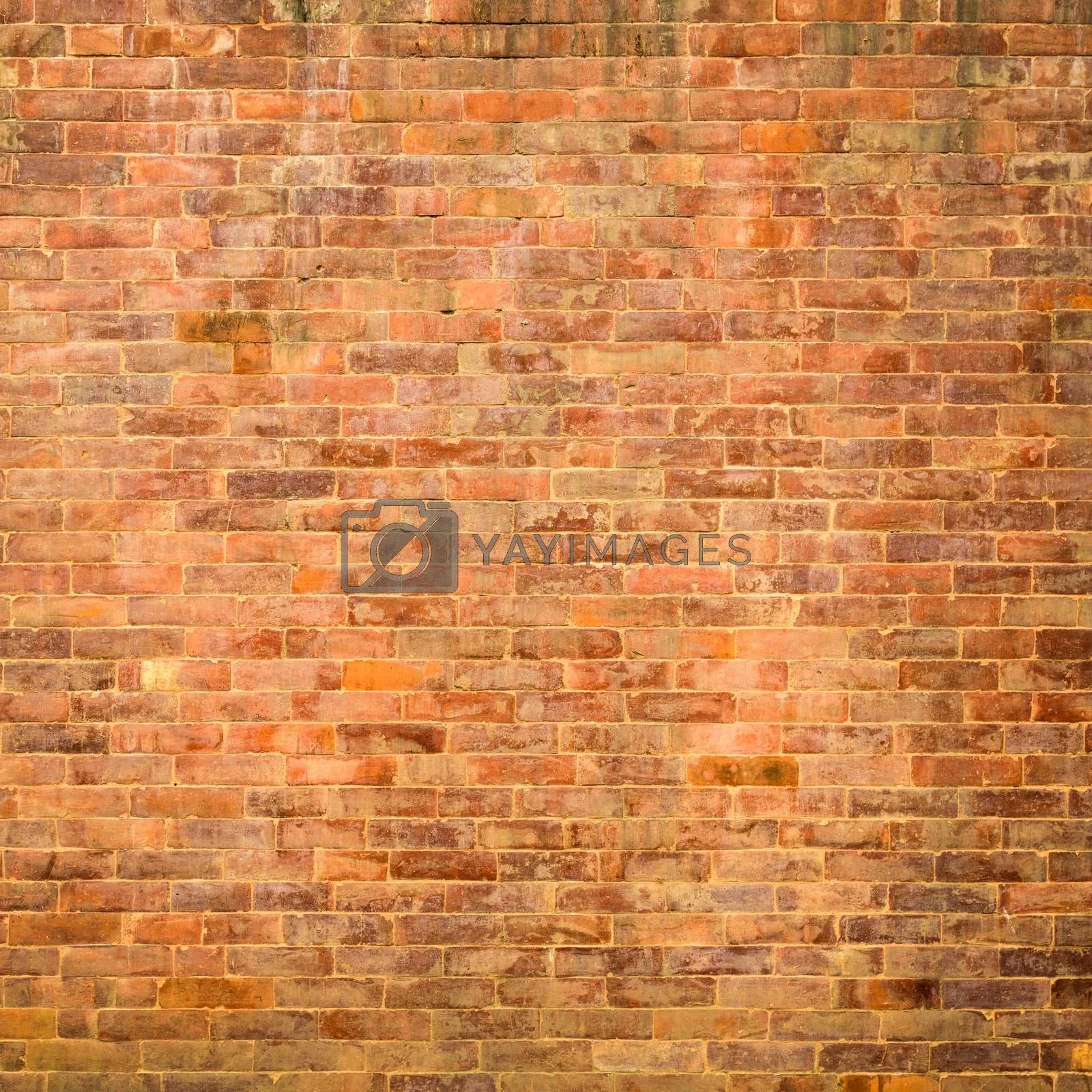 Royalty free image of Brick wall texture by dutourdumonde