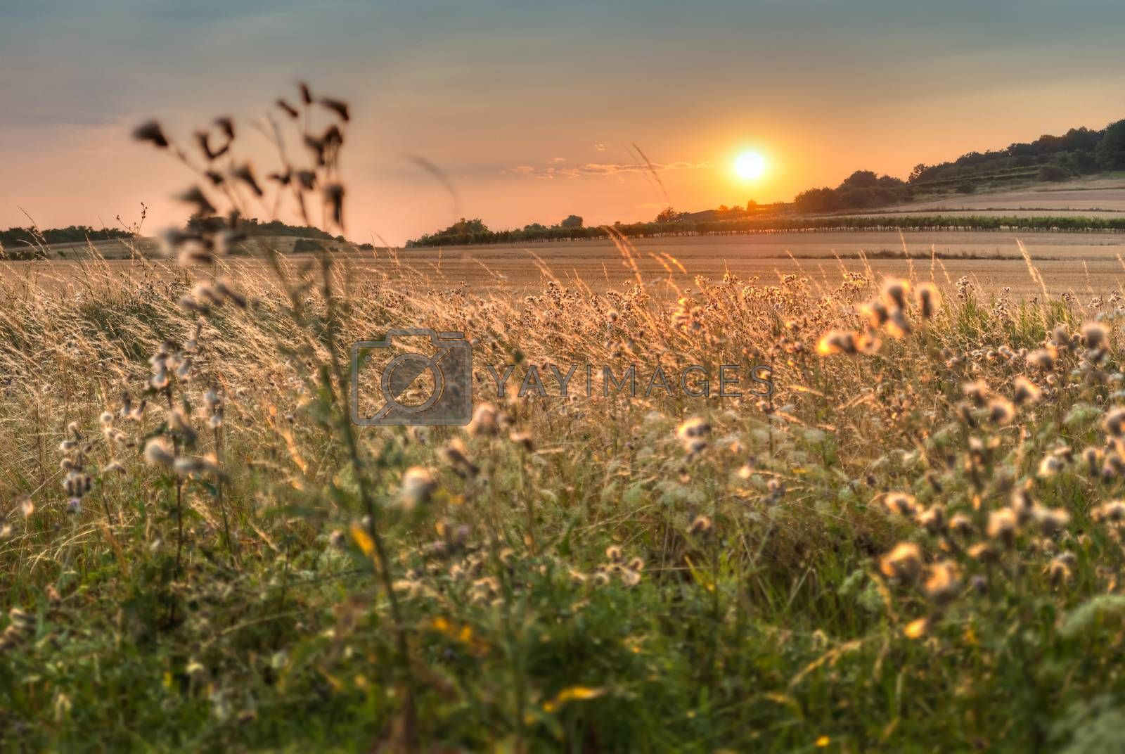 Royalty free image of atmosferic sunset over the field by Kayco