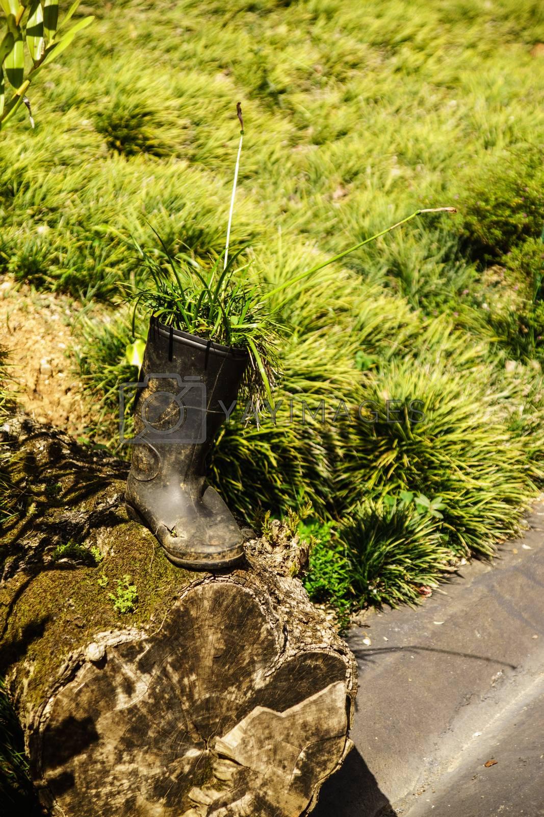 Royalty free image of boot in garden by nattapatt