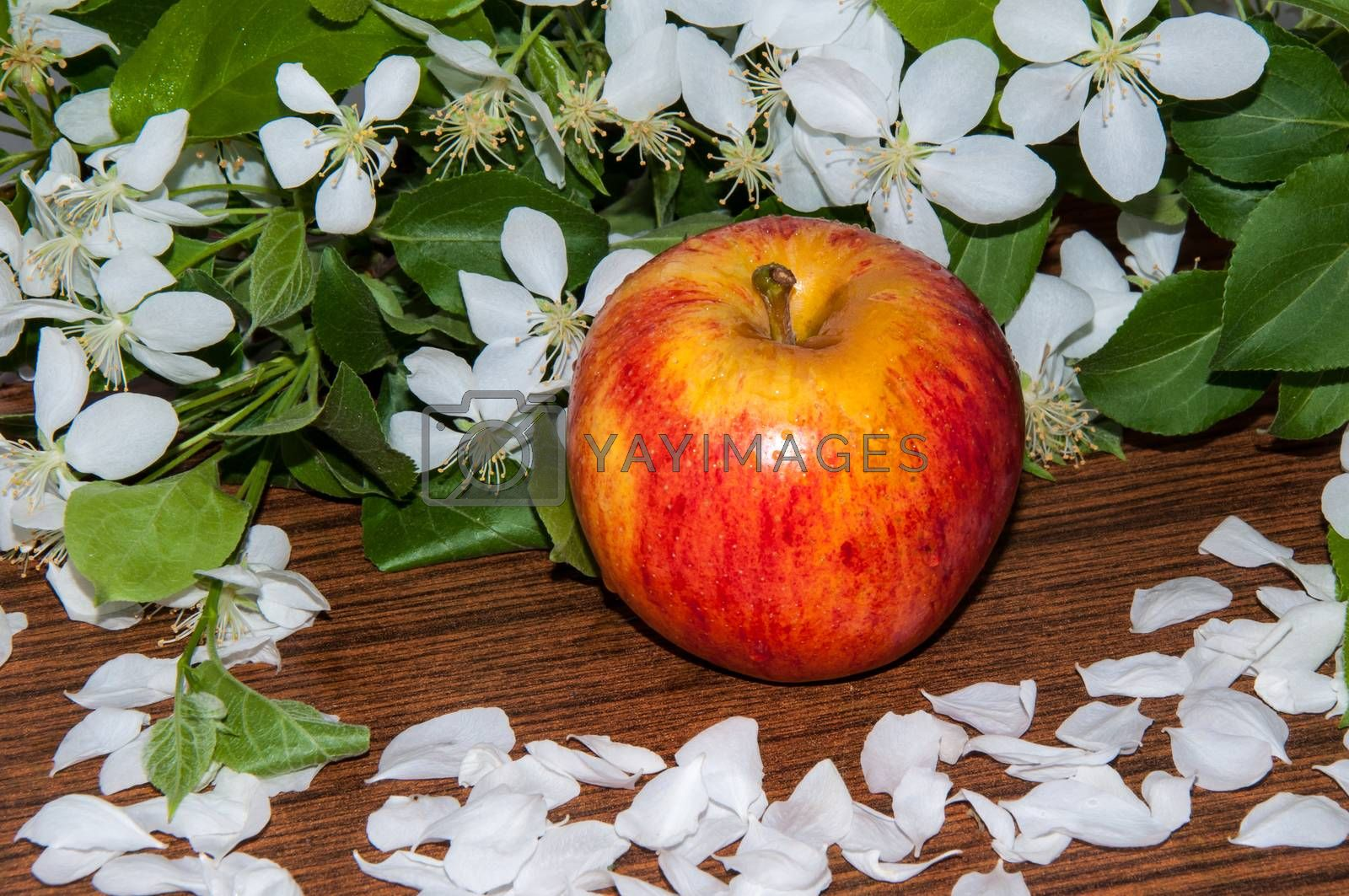 Royalty free image of Apple and crabapple flowers by 0608195706081957