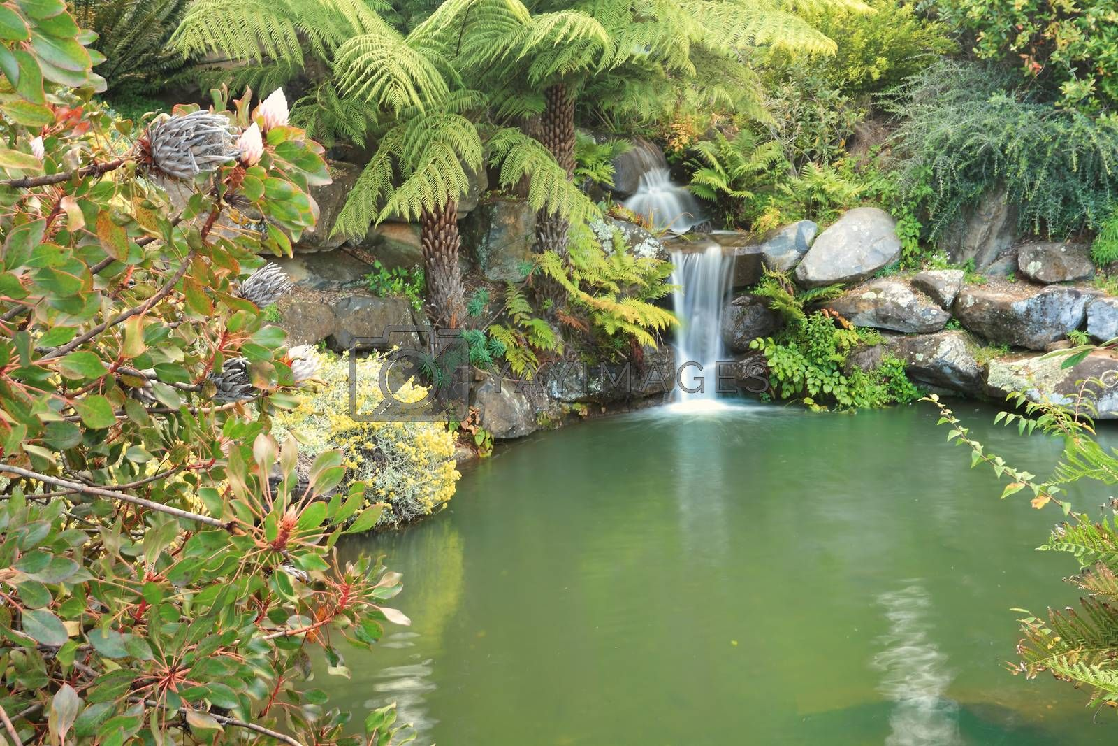 Royalty free image of Tranquil waterfall in lush environment Mt Tomah Australia by lovleah