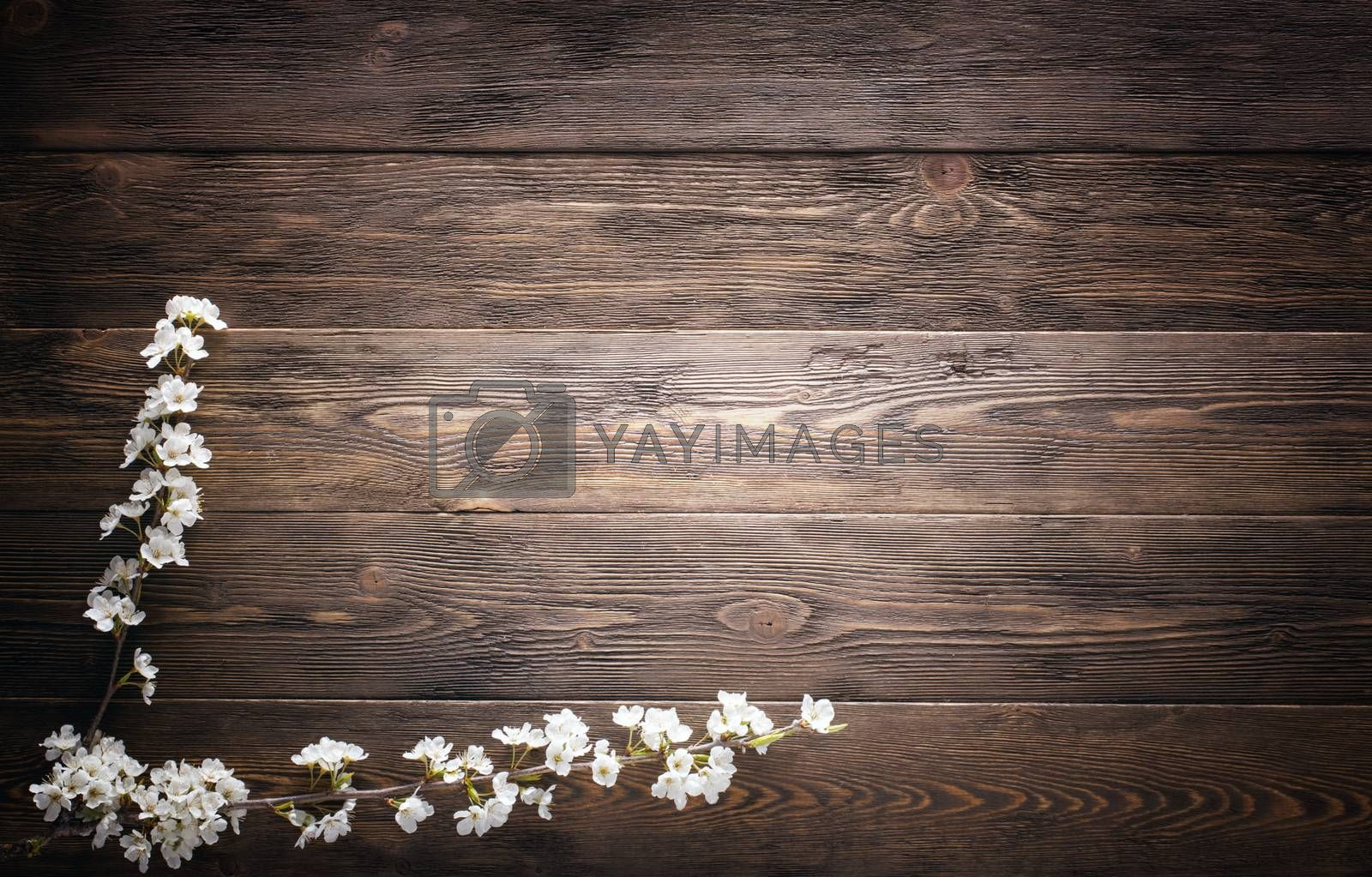 Royalty free image of Flowers on wood texture background by primopiano