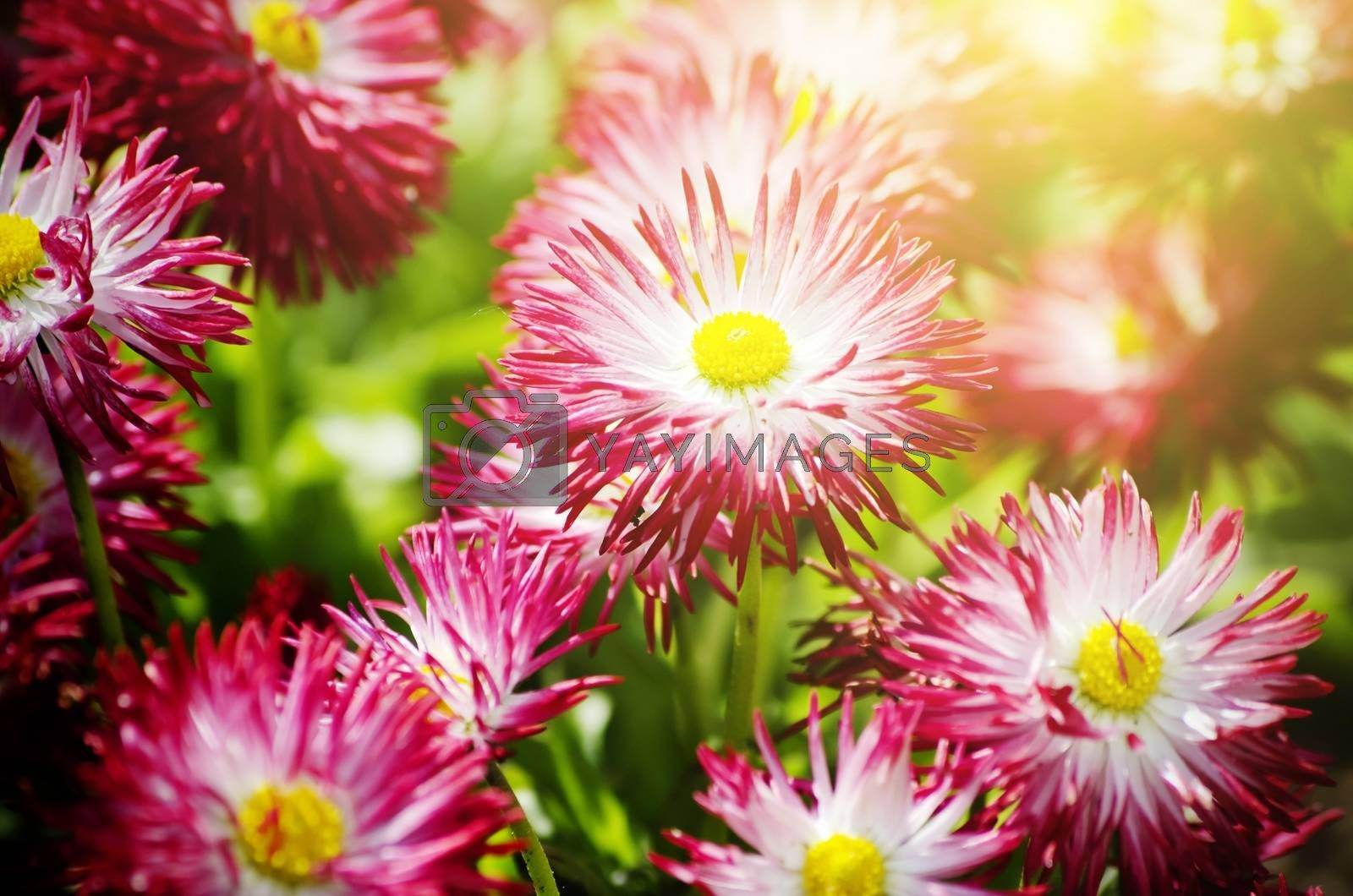 Royalty free image of Flower by razvodovska