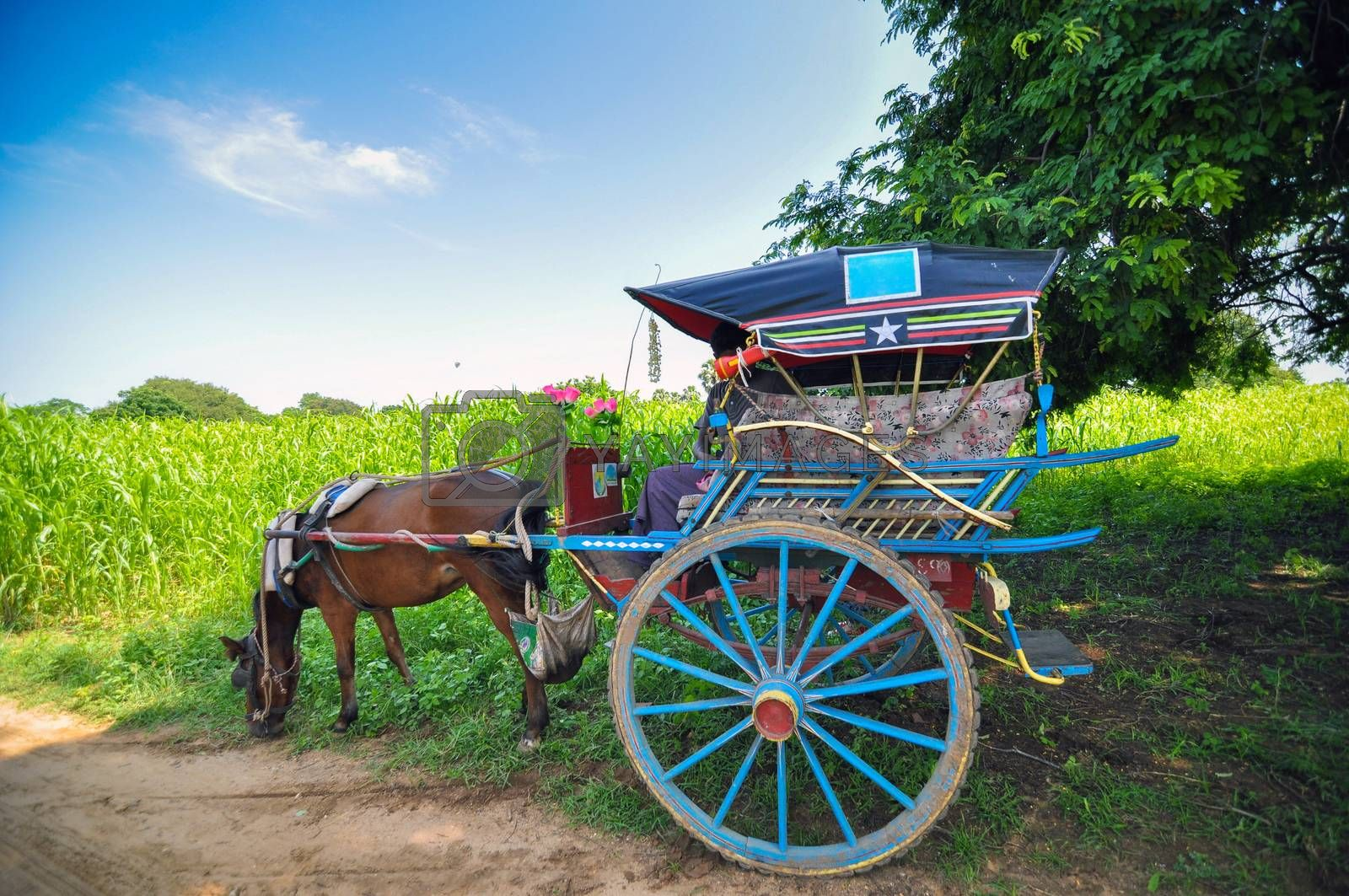 Royalty free image of Horse carriage in Bagan, Myanmar  by siraanamwong
