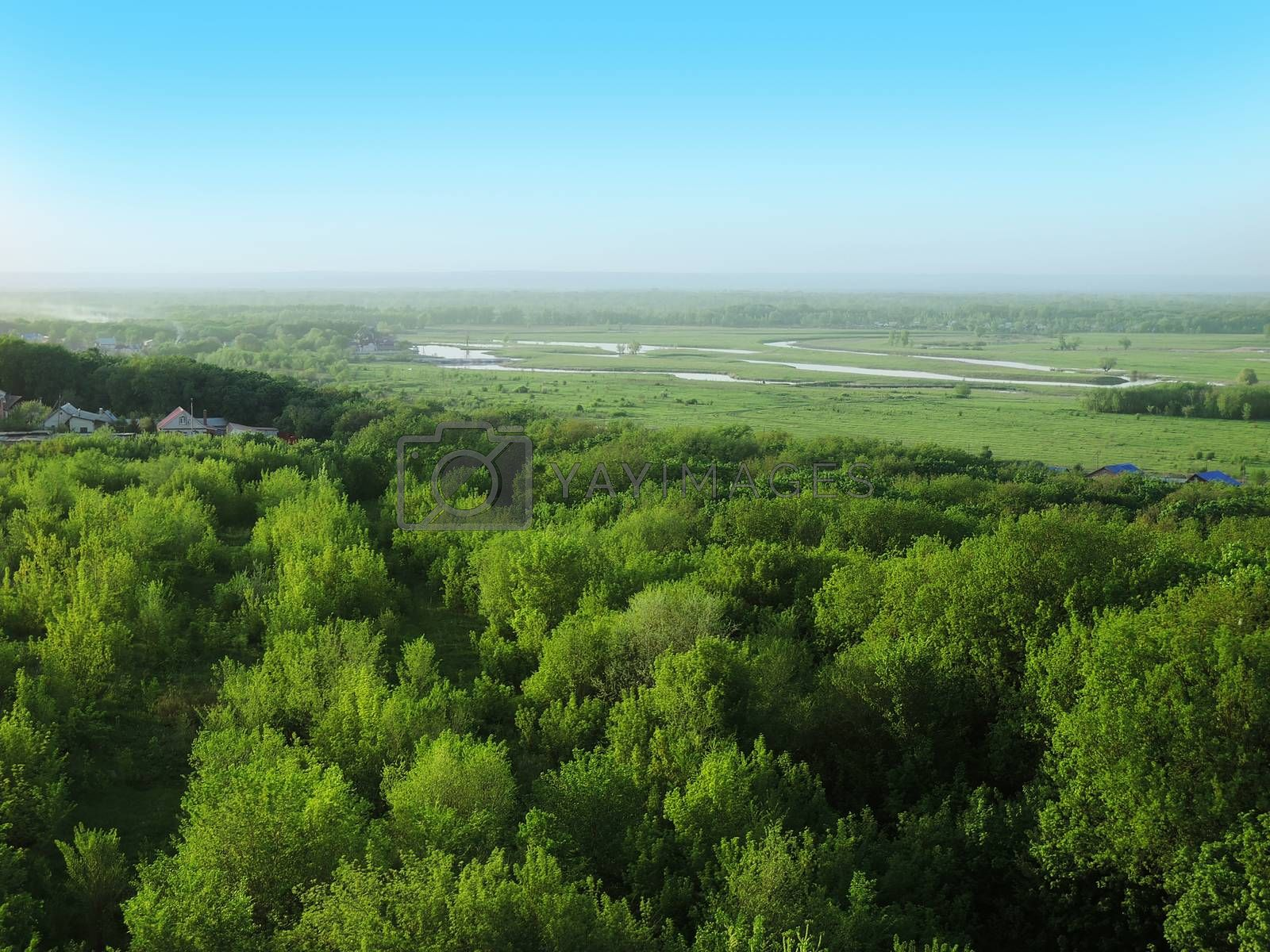 forest in summer and a meandering river on field