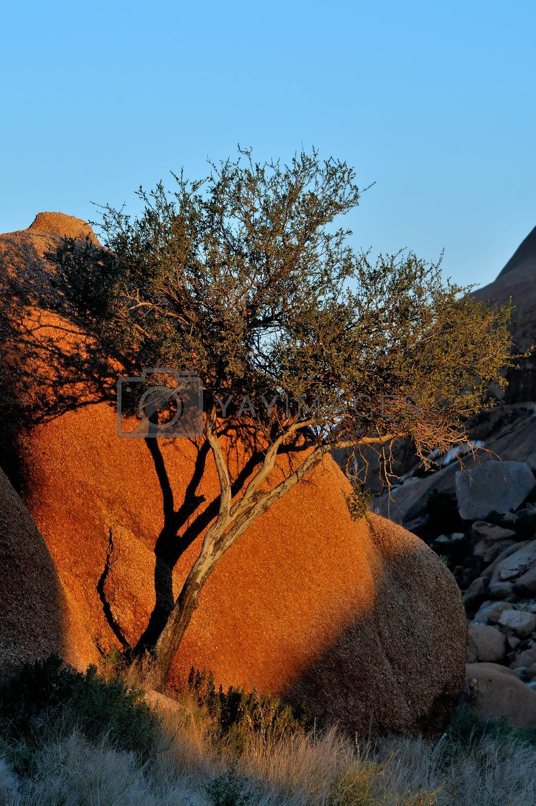 Royalty free image of Rock formation at Spitzkoppe by dpreezg