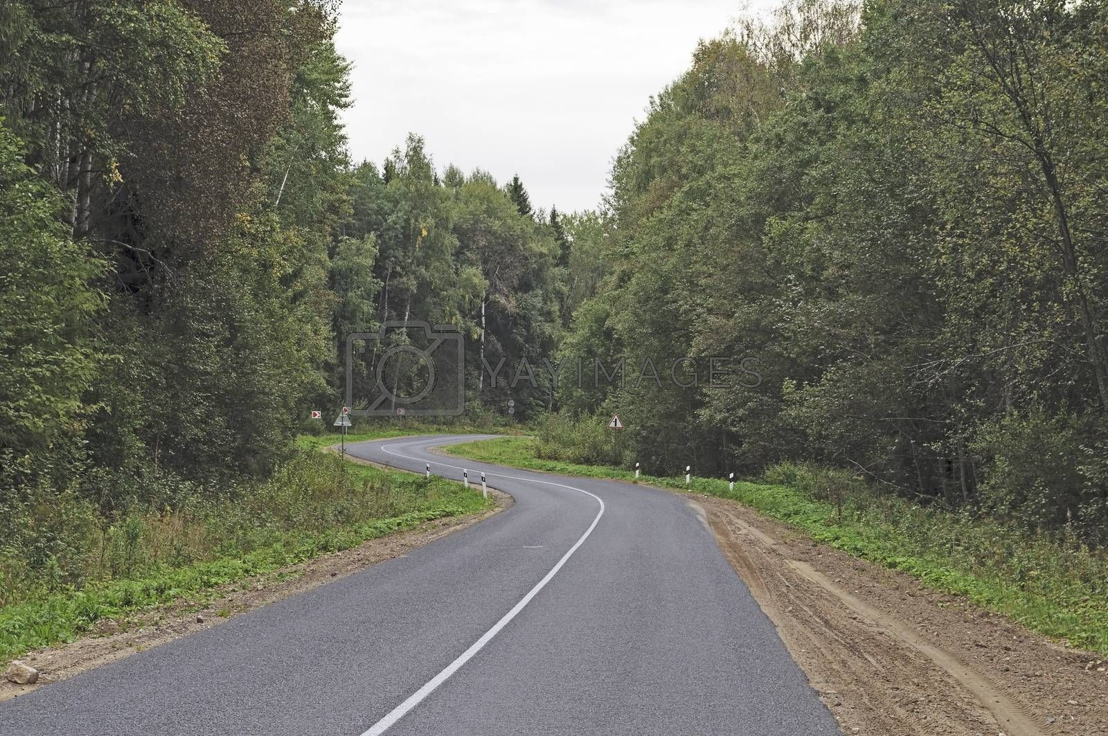 Winding asphalt road in the forest