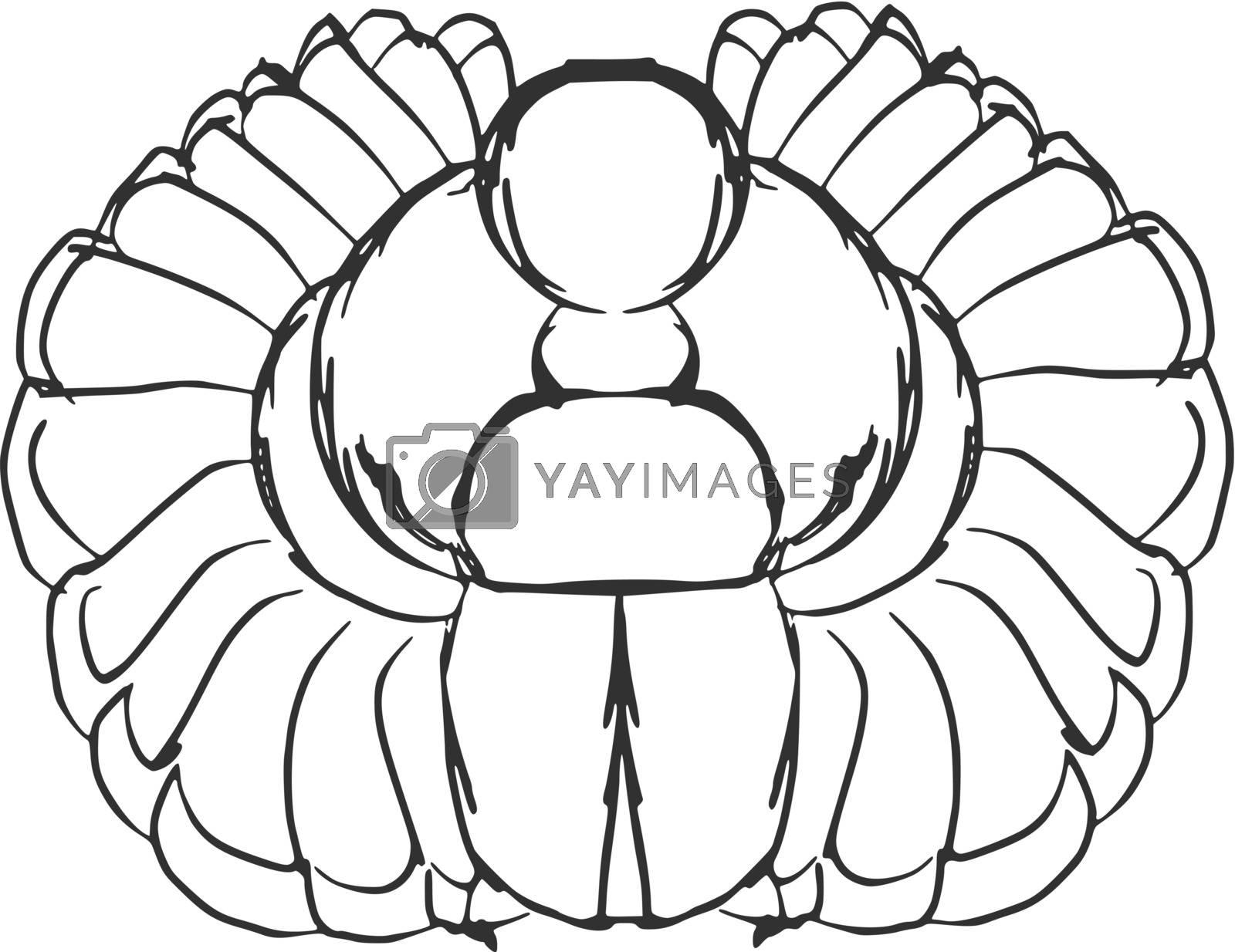 hand drawn, sketch illustration of scarab beetle