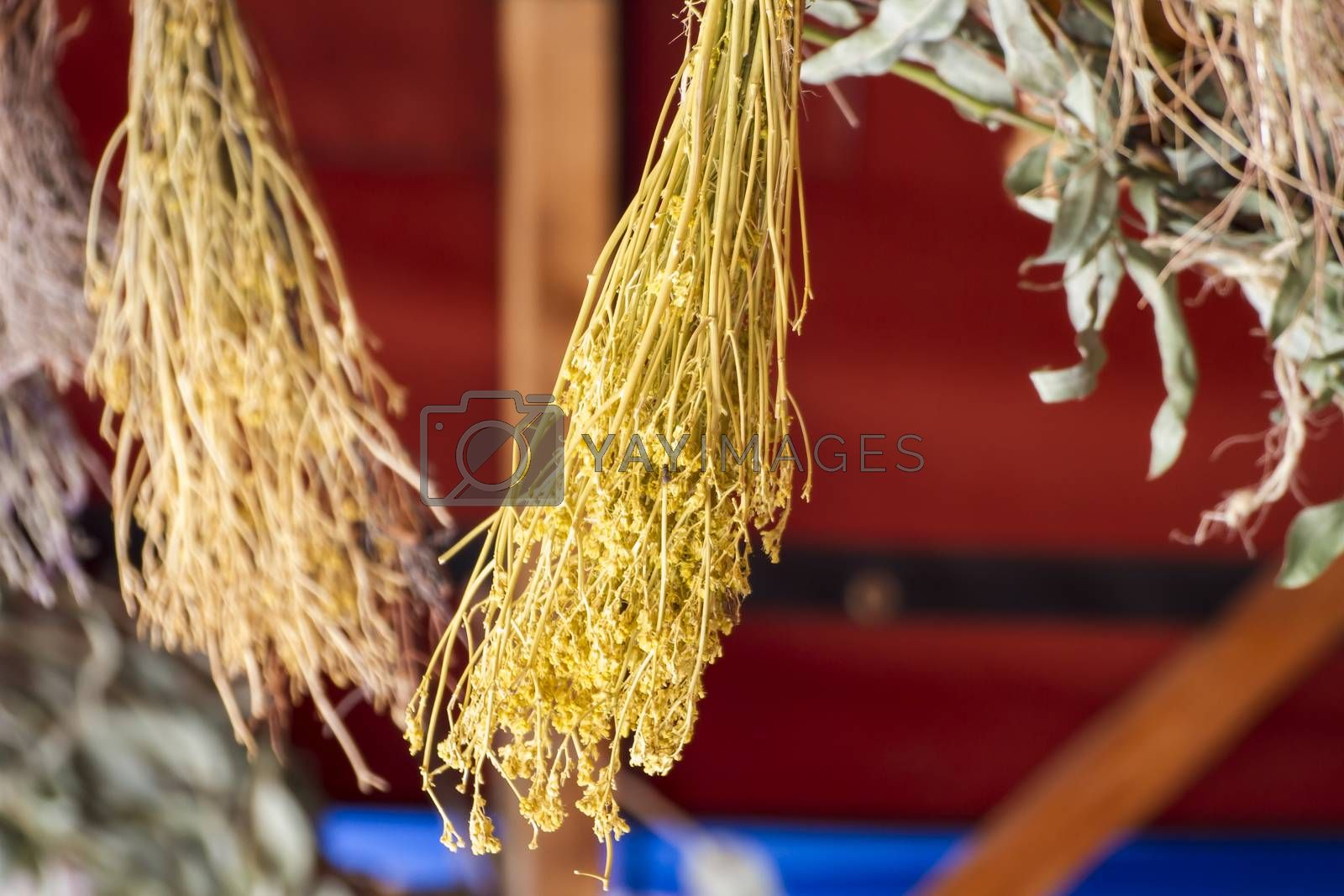 Spa, sample herbs drying in the sun