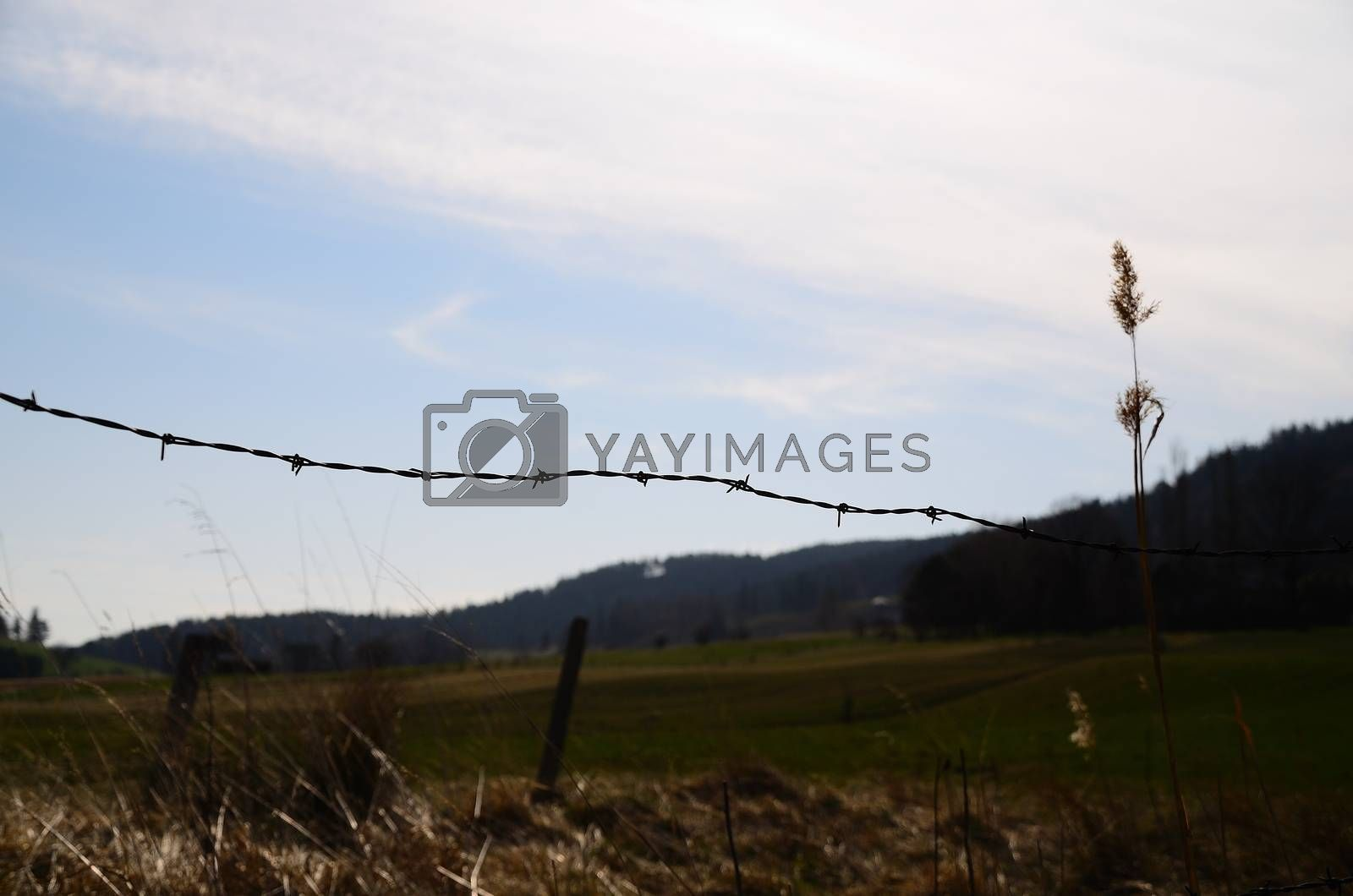 barbed wire while hiking in a natural landscape