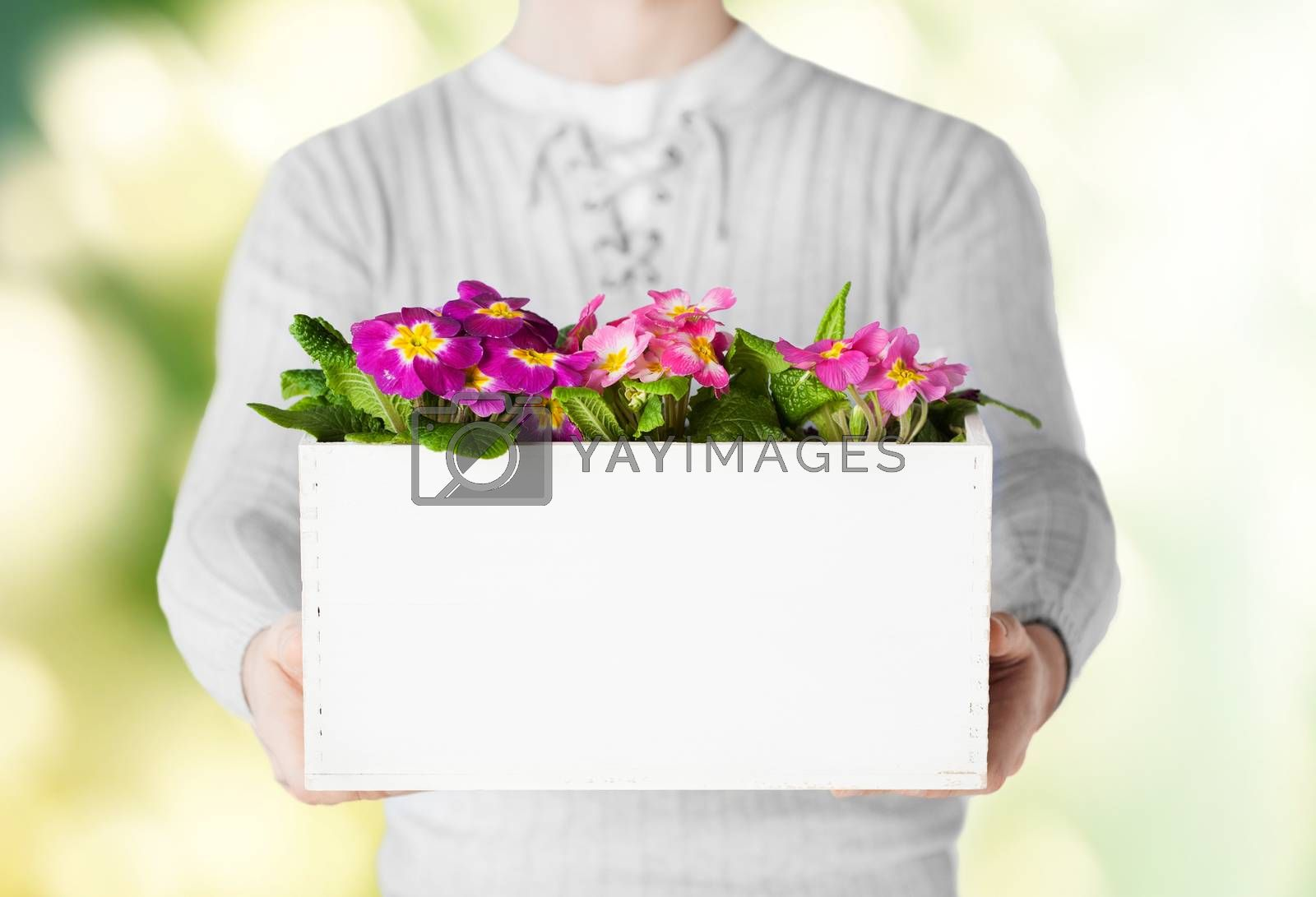 man holding big pot with flowers by dolgachov