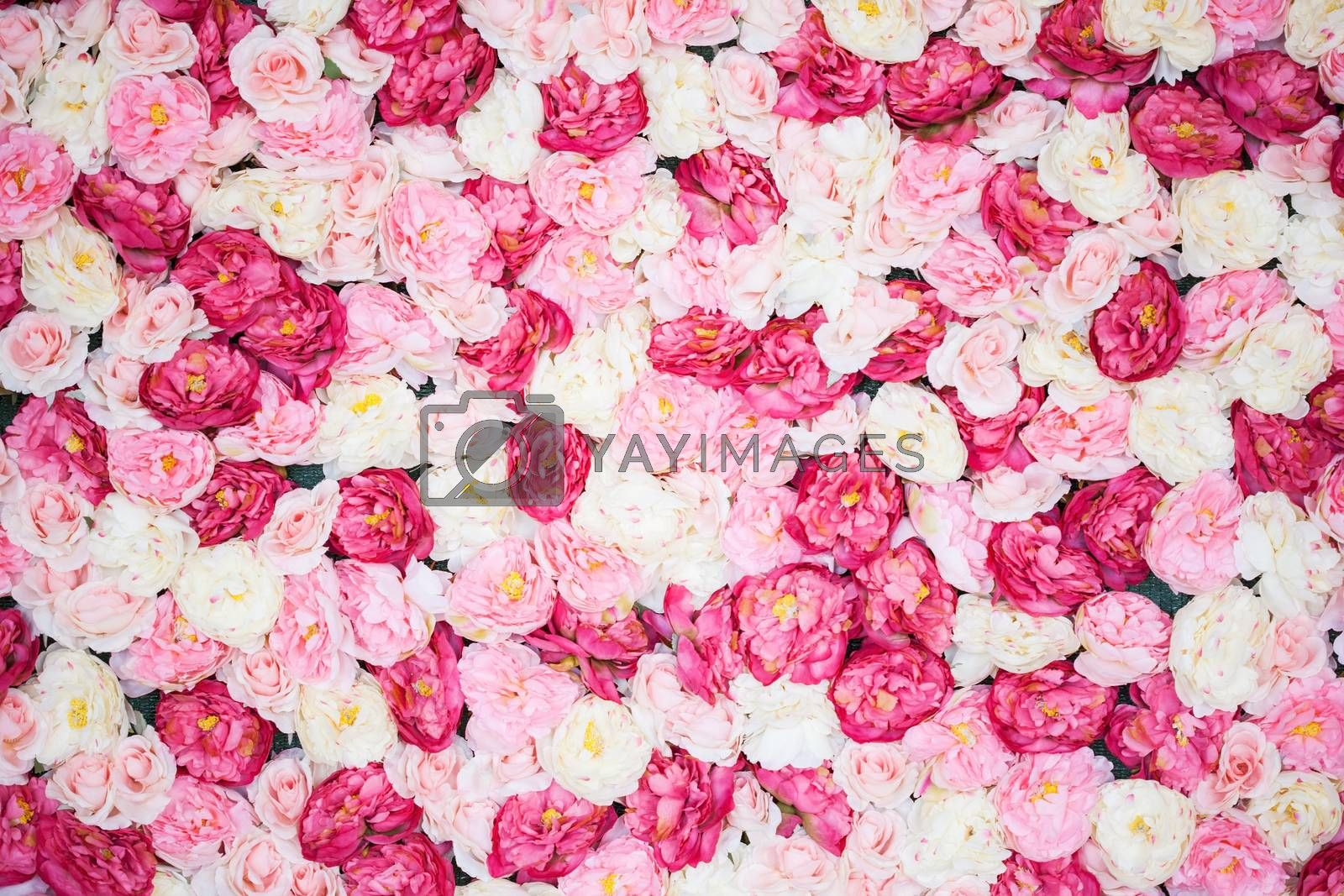 background full of white and pink peonies by dolgachov