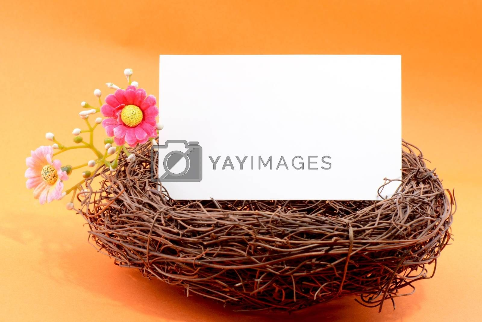 Nest with a blank white card on an orange background