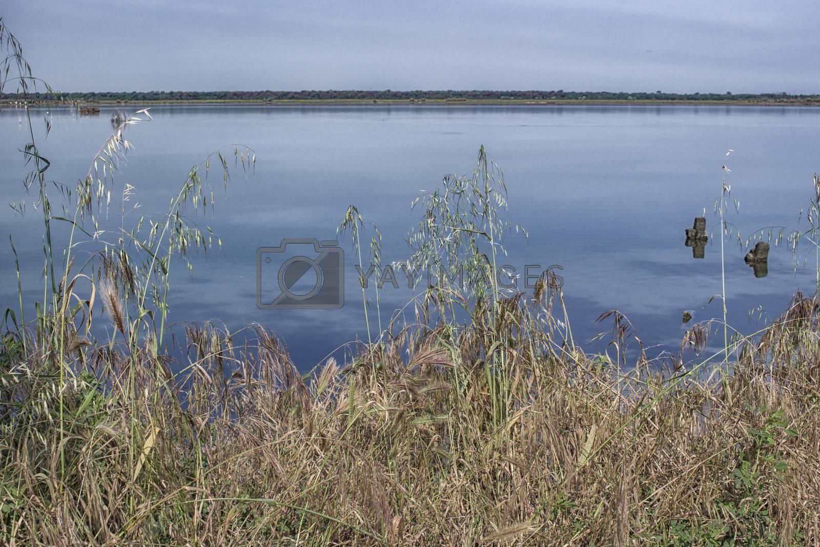 Plants on the Pialassa della Baiona brackish lagoon near Marina Romea along te  Adriatic seaside in Ravenna (Italy)