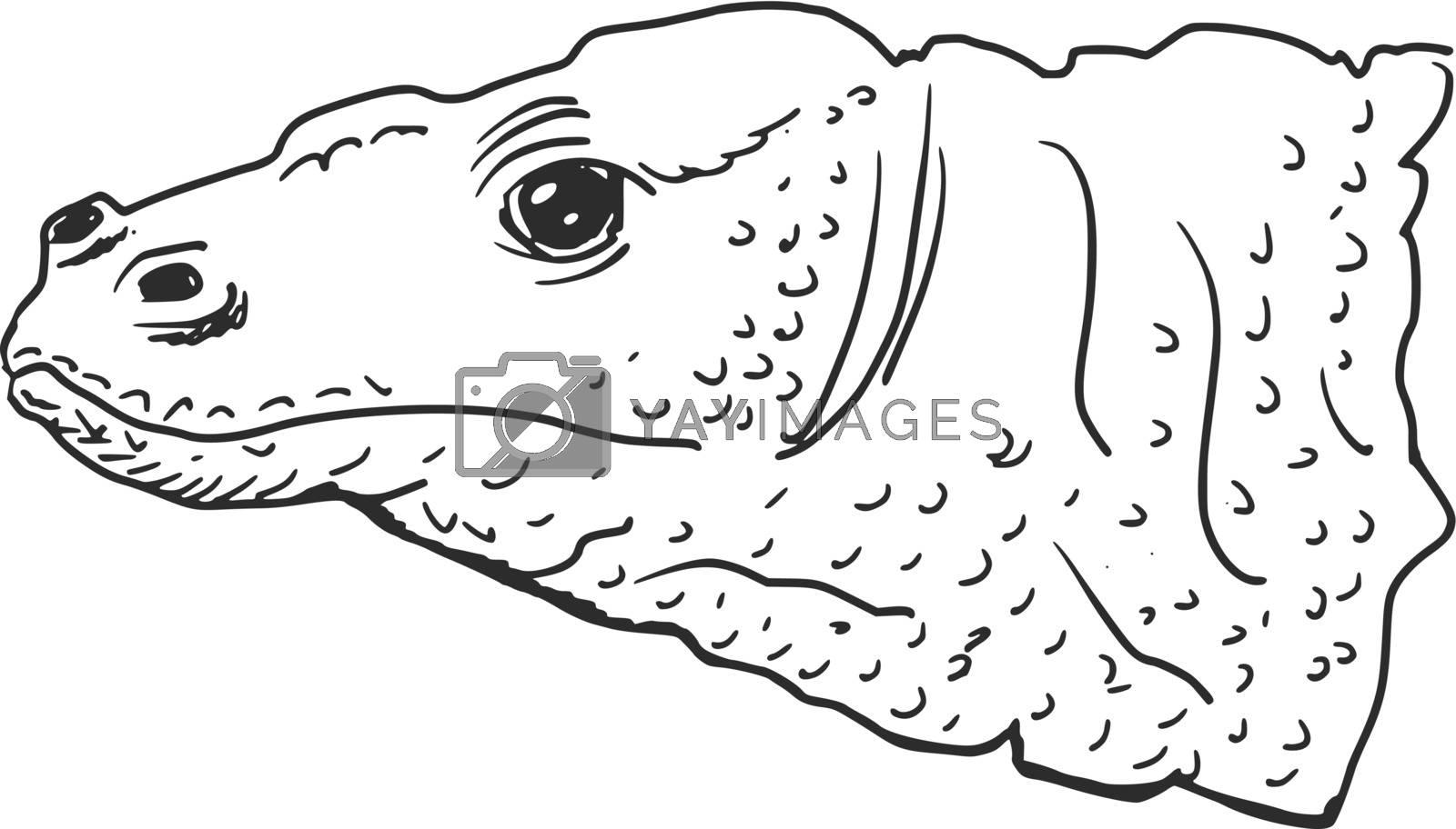 hand drawn, sketch illustration of Komodo dragon