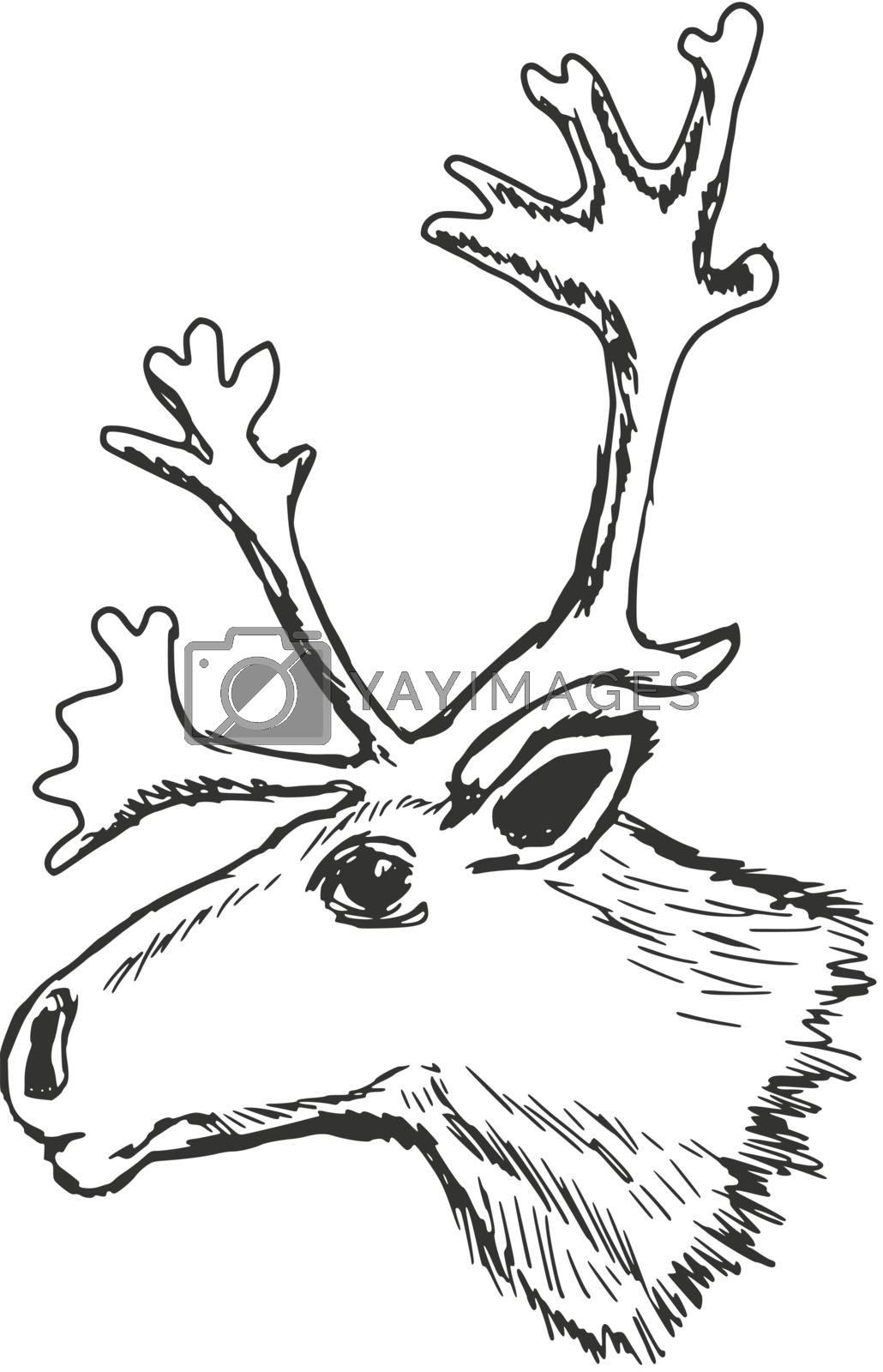 hand drawn, sketch illustration of head of reindeer