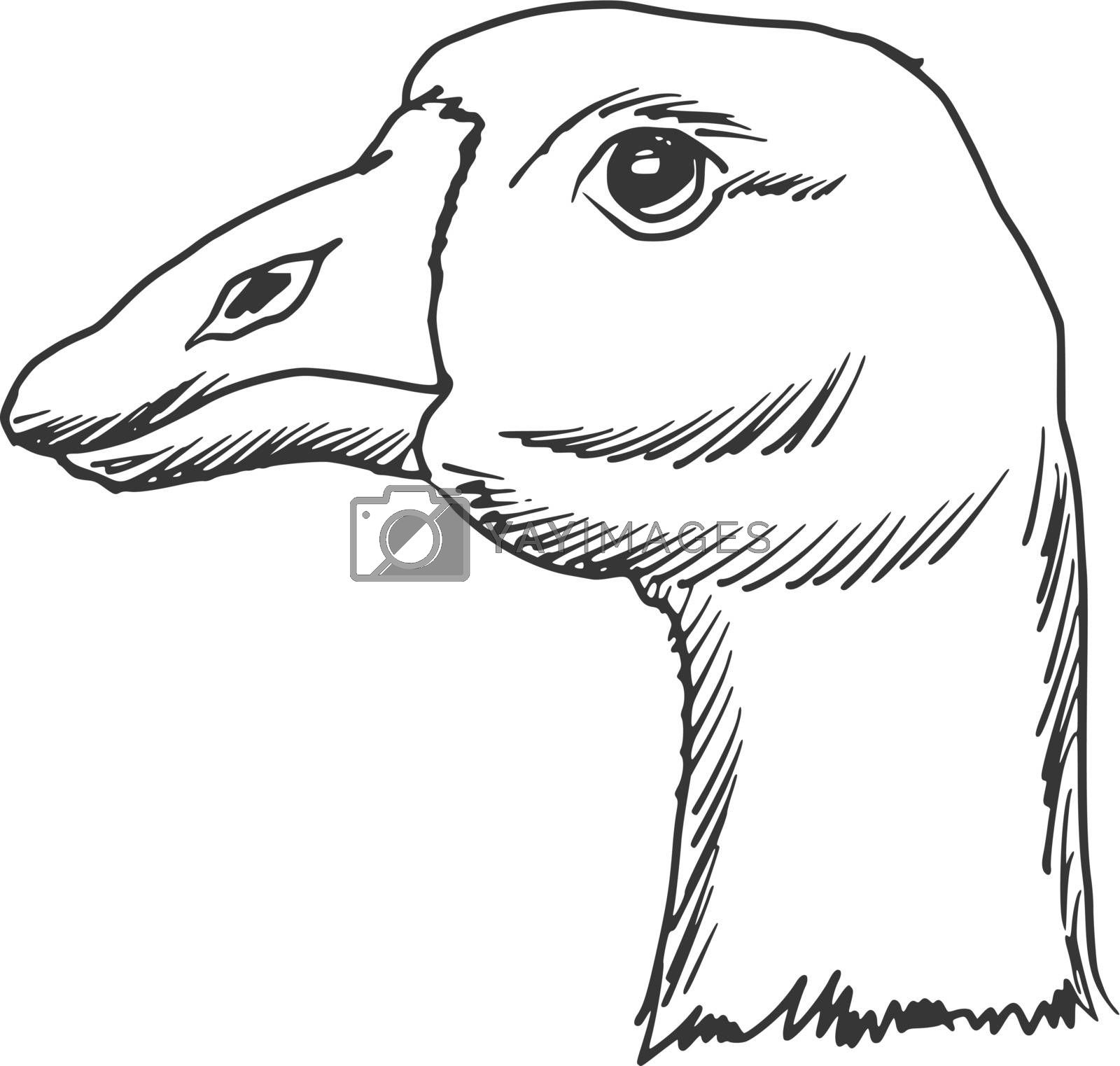 hand drawn, sketch, cartoon illustration of goose