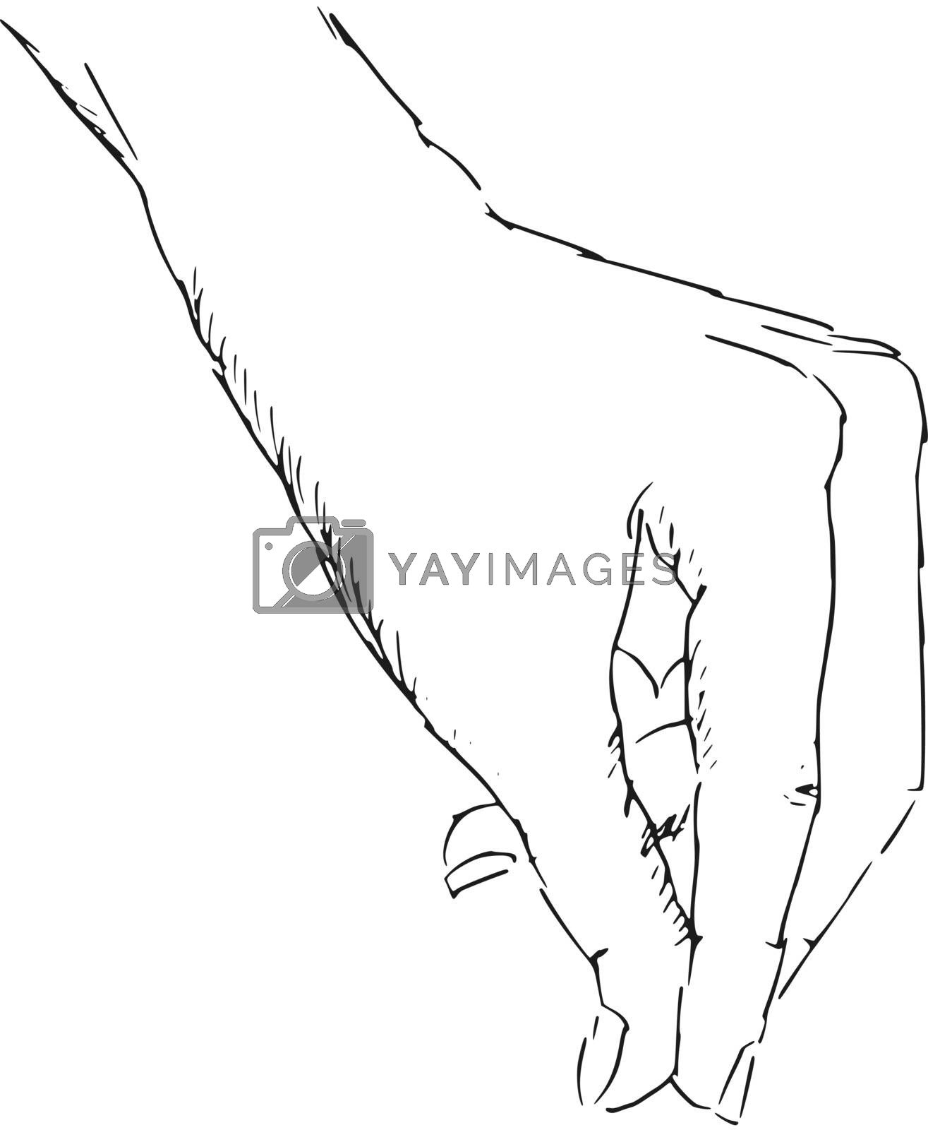 hand drawn, sketch, illustration of hand of woman