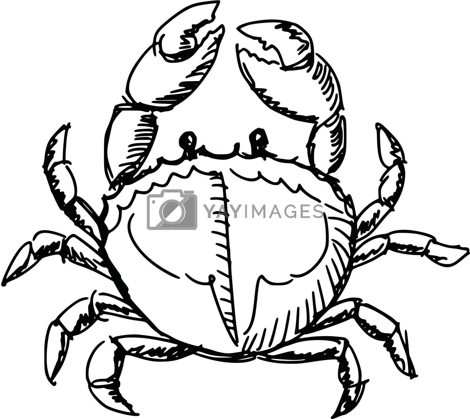 hand drawn, sketch, cartoon illustration of crab