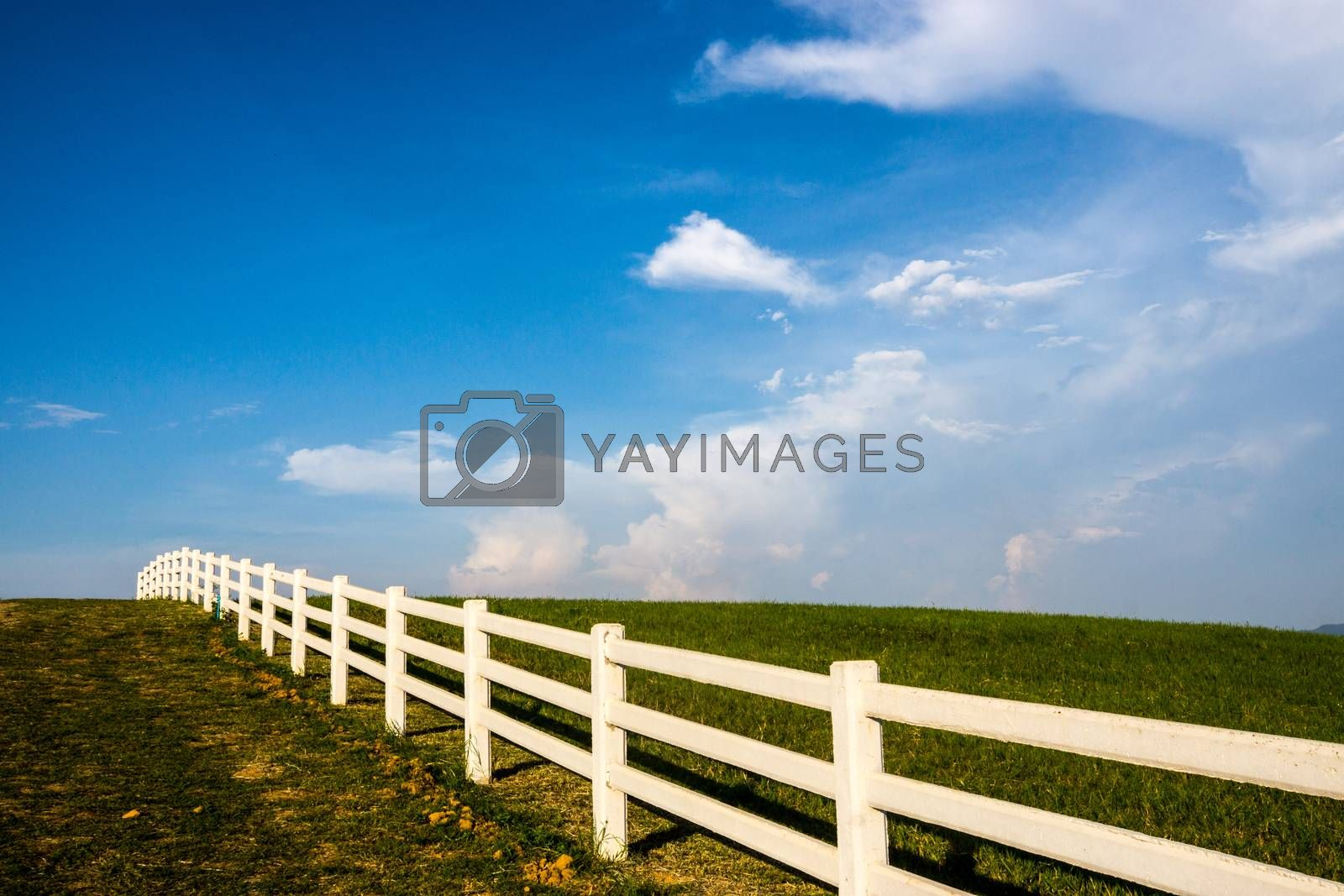 grass field on the mountain and clear sky