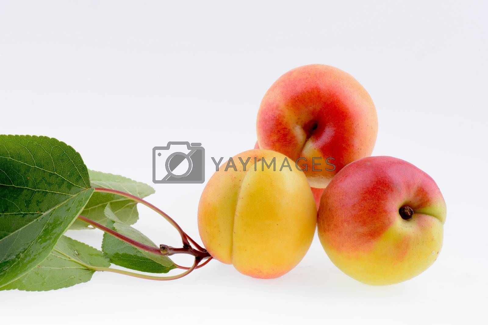 Ripe apricot closeup with green leaves on a white background