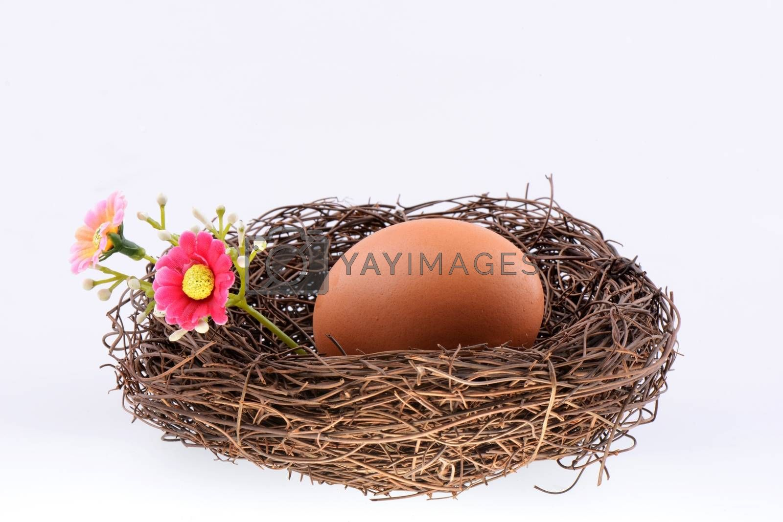 Bird's nest with an egg isolated on a white background