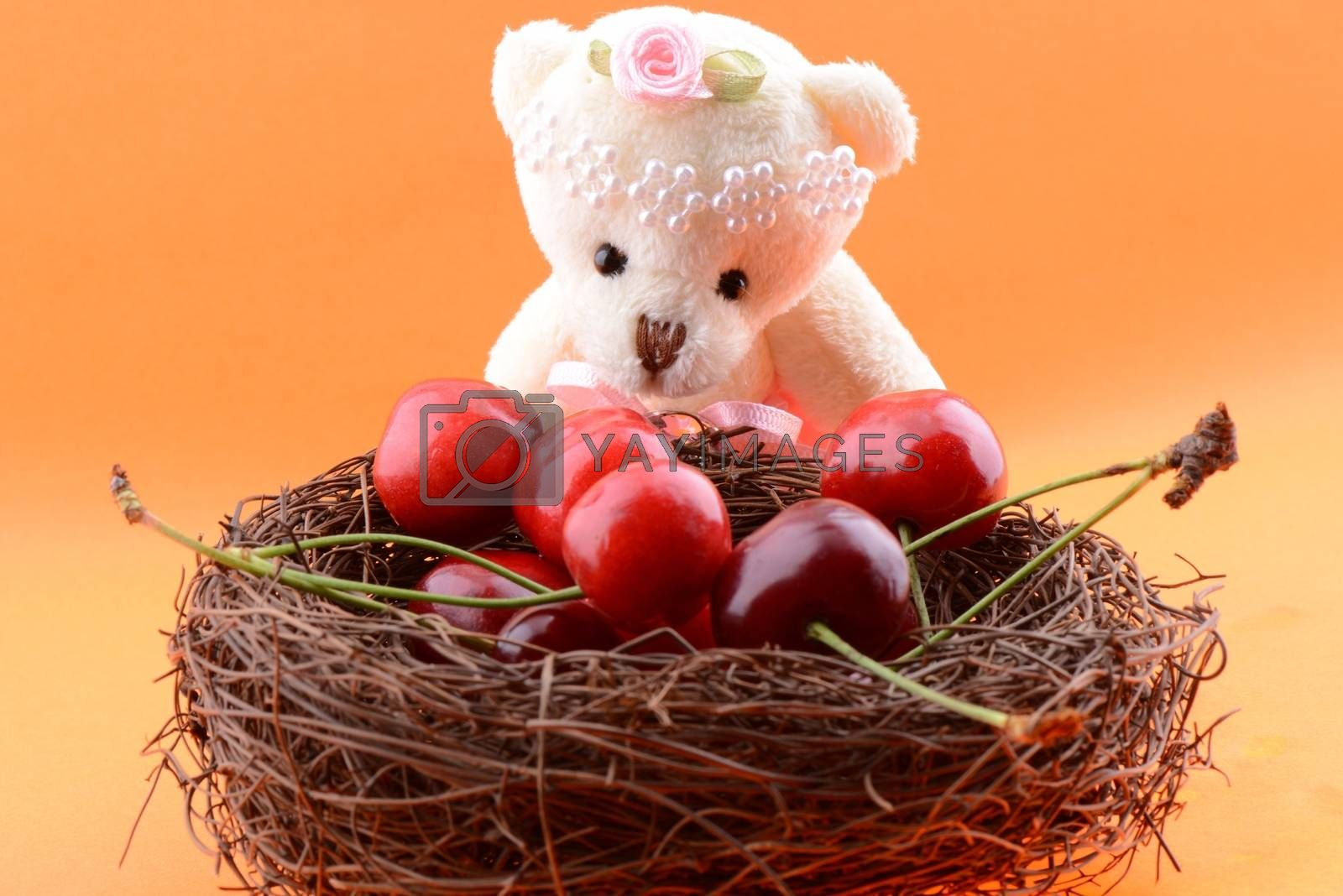 Toy teddy bear collecting Sweet cherries isolated on an orange background