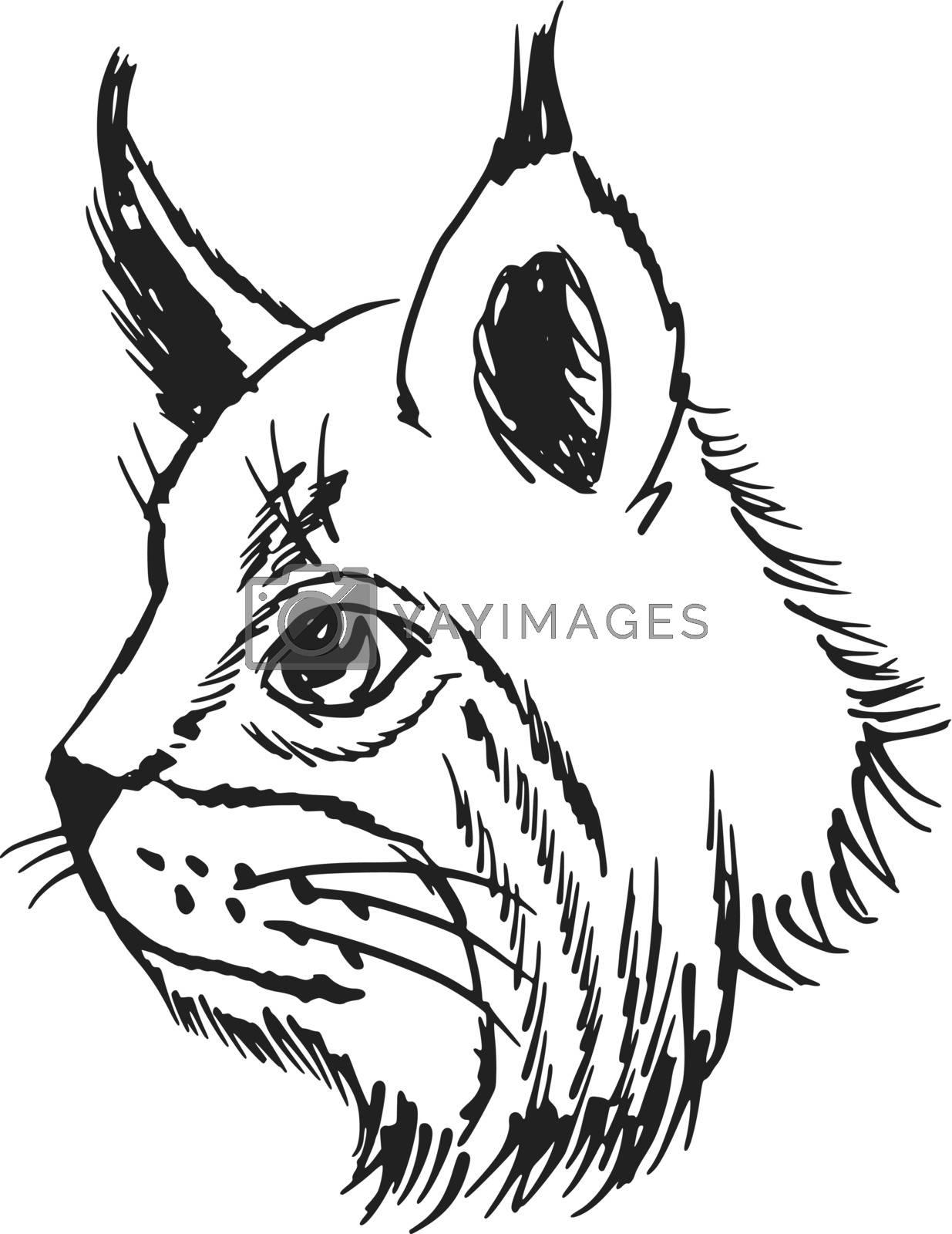 hand drawn, sketch, cartoon illustration of lynx