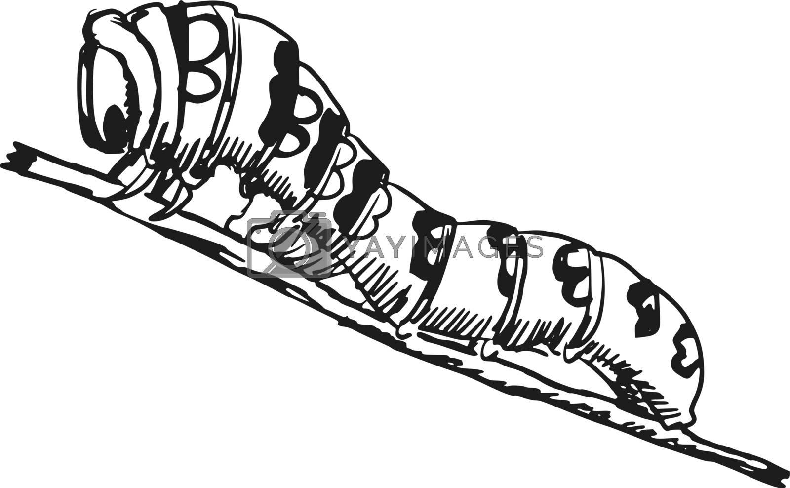 hand drawn, sketch, cartoon illustration of caterpillar