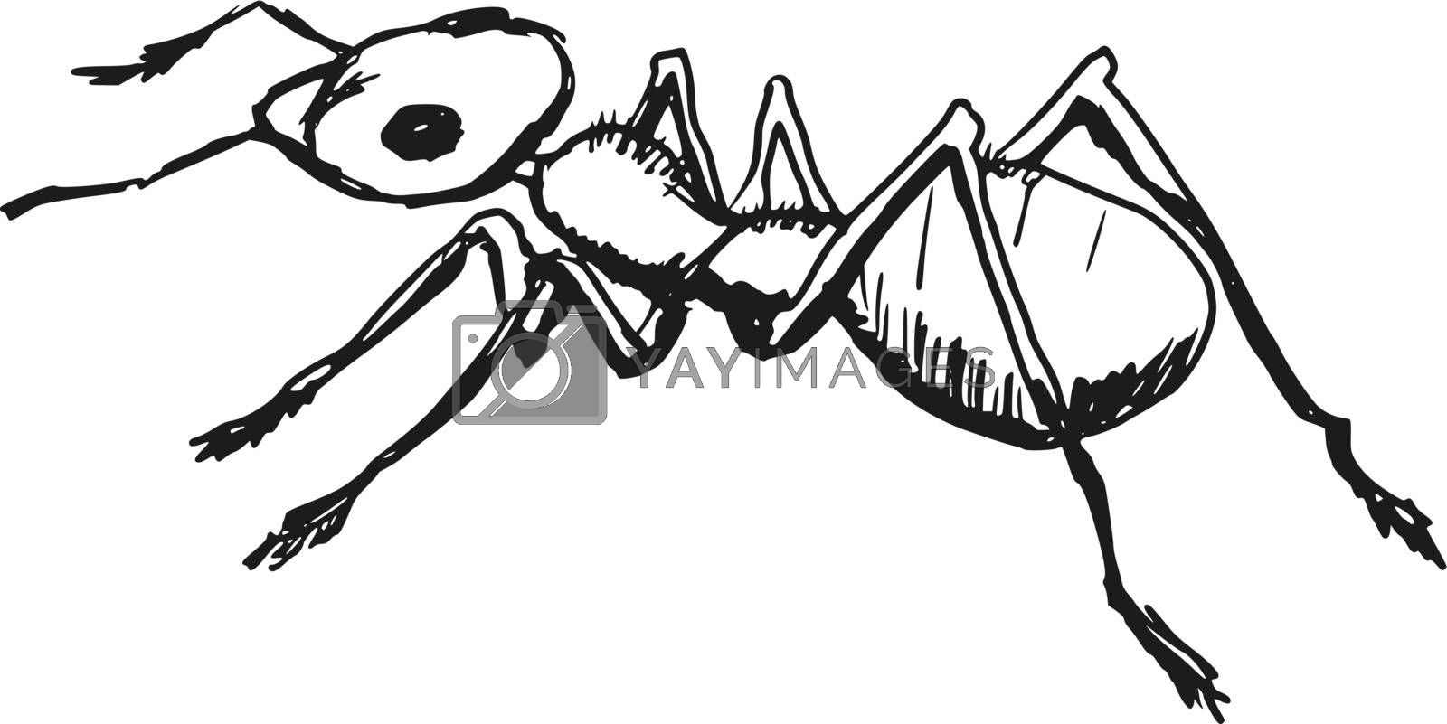 hand drawn, sketch, cartoon illustration of red ant