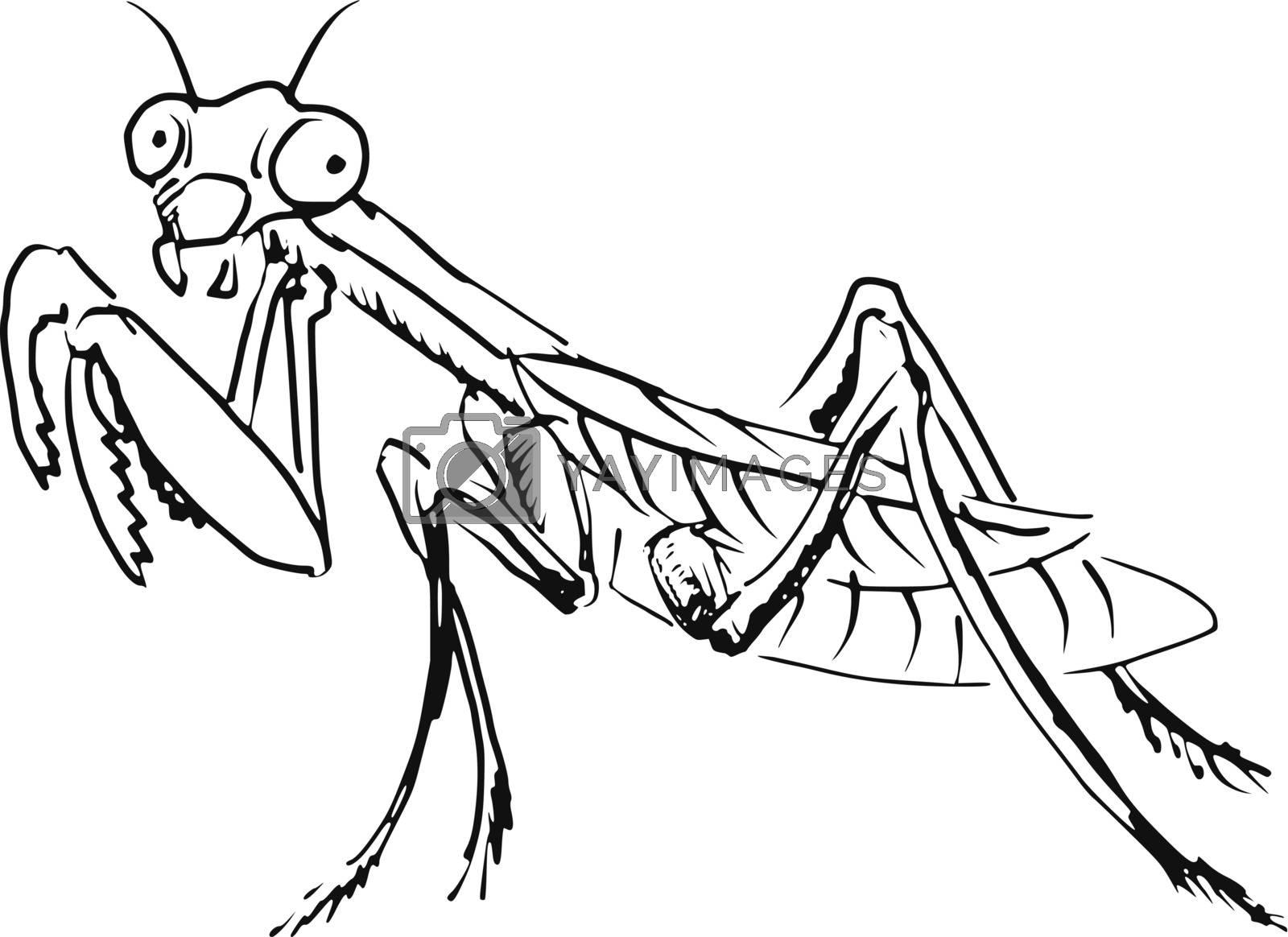 hand drawn, sketch, cartoon illustration of mantis